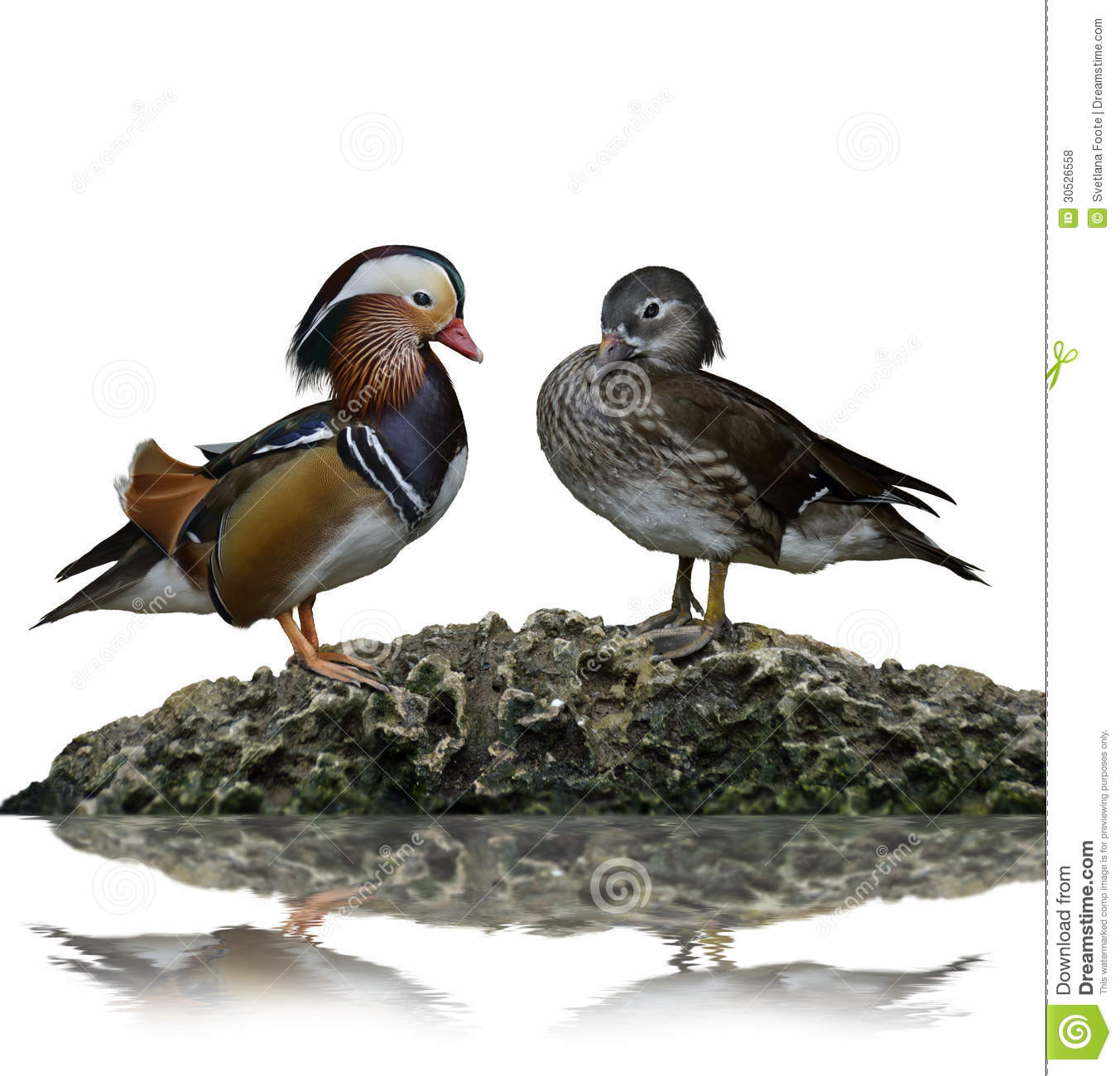 Download Male And Female Mandarin Ducks Stock Photo