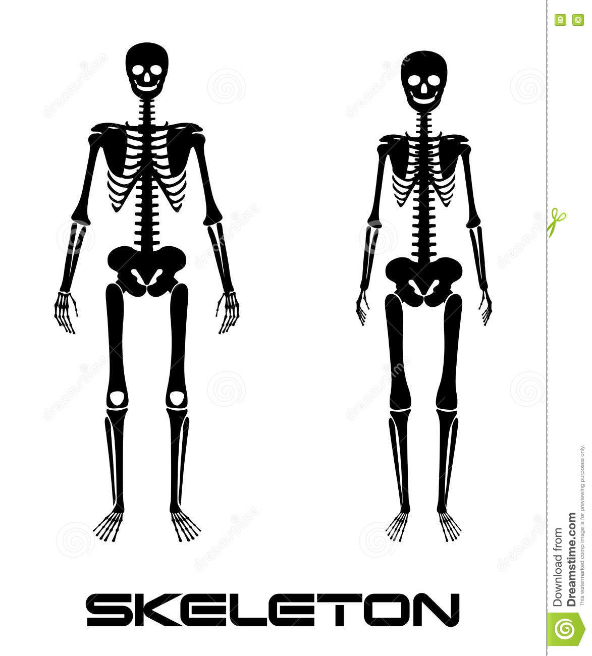 Male and female skeleton - vector silhouettes