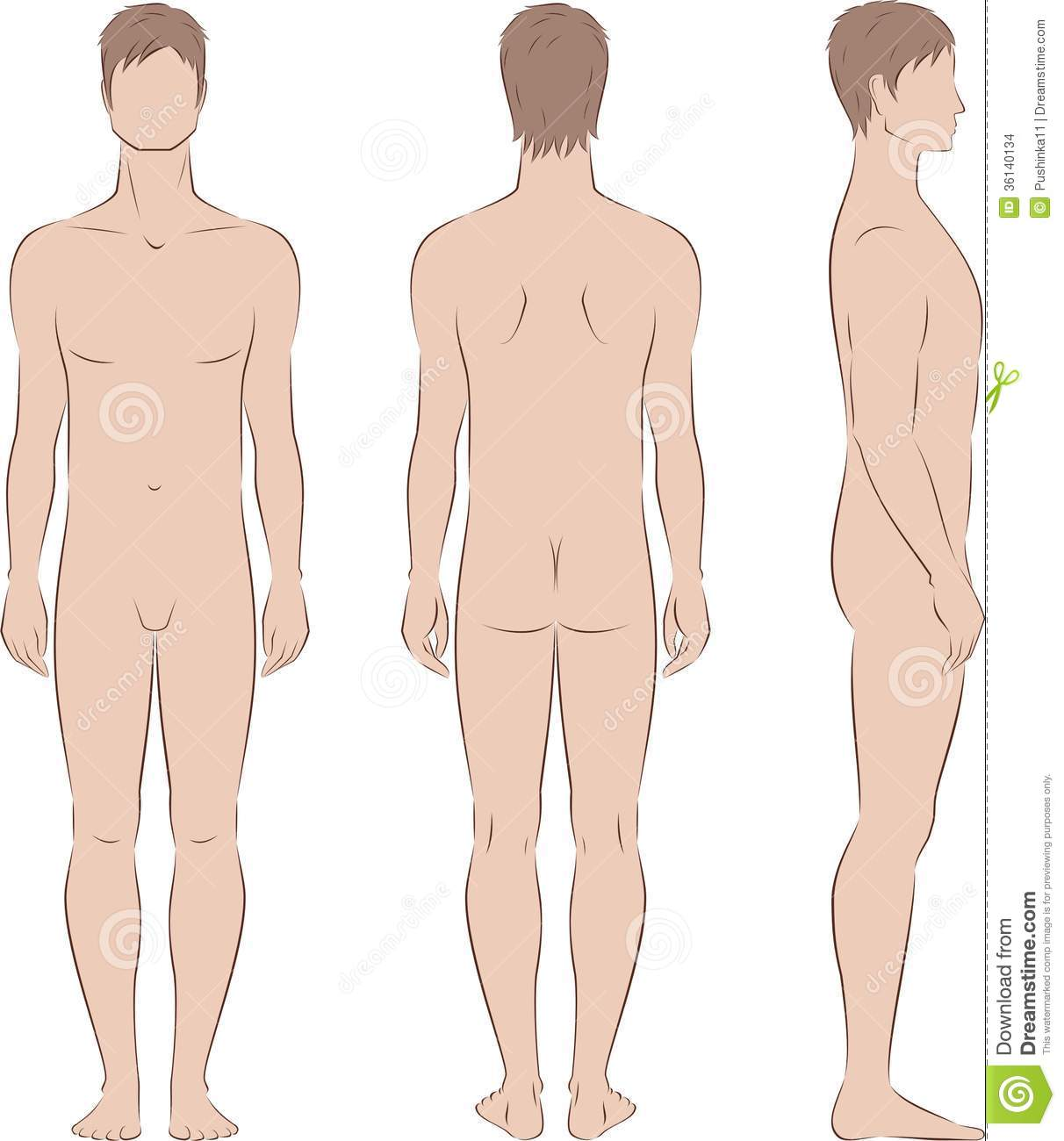 male figure stock vector illustration of back front 36140134