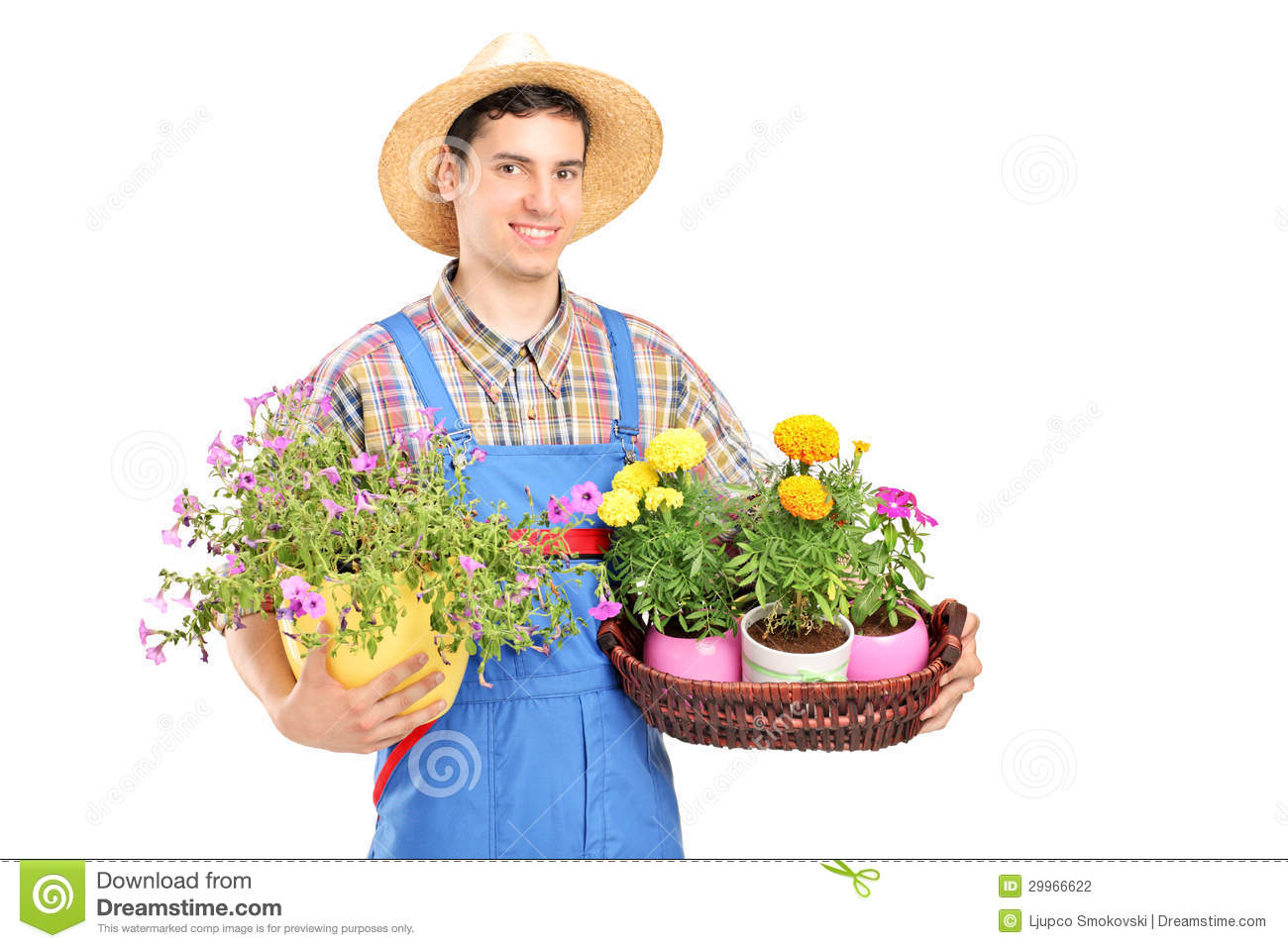 Male Gardener With A Straw Hat Holding Flower Plants Stock