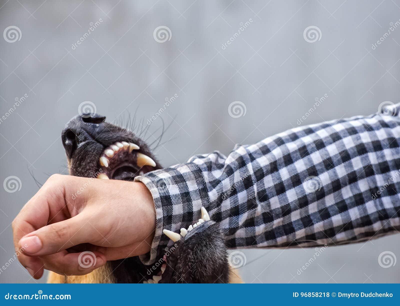 Male German shepherd bites a man by the hand