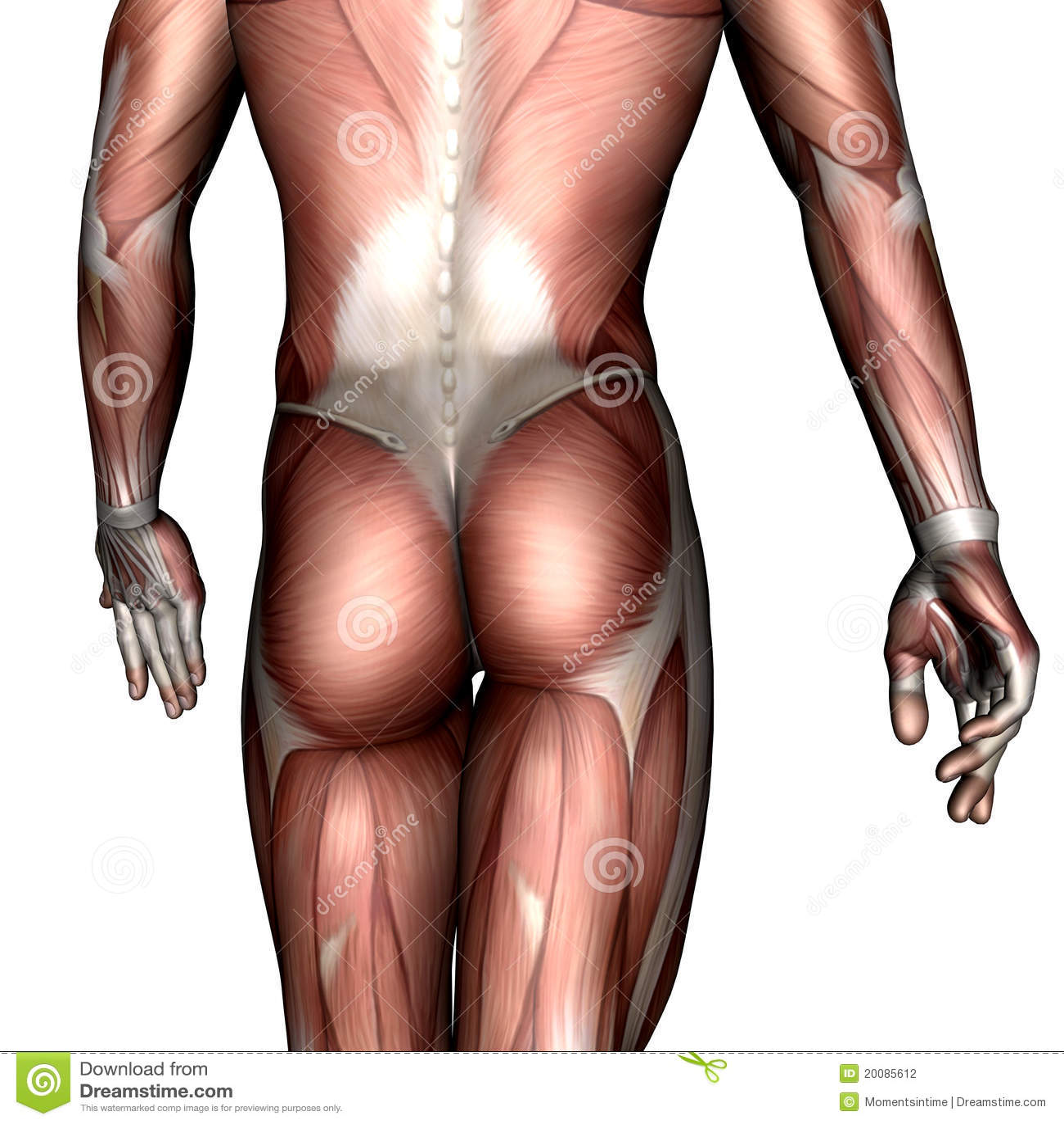 Nude muscular men medical exams gay