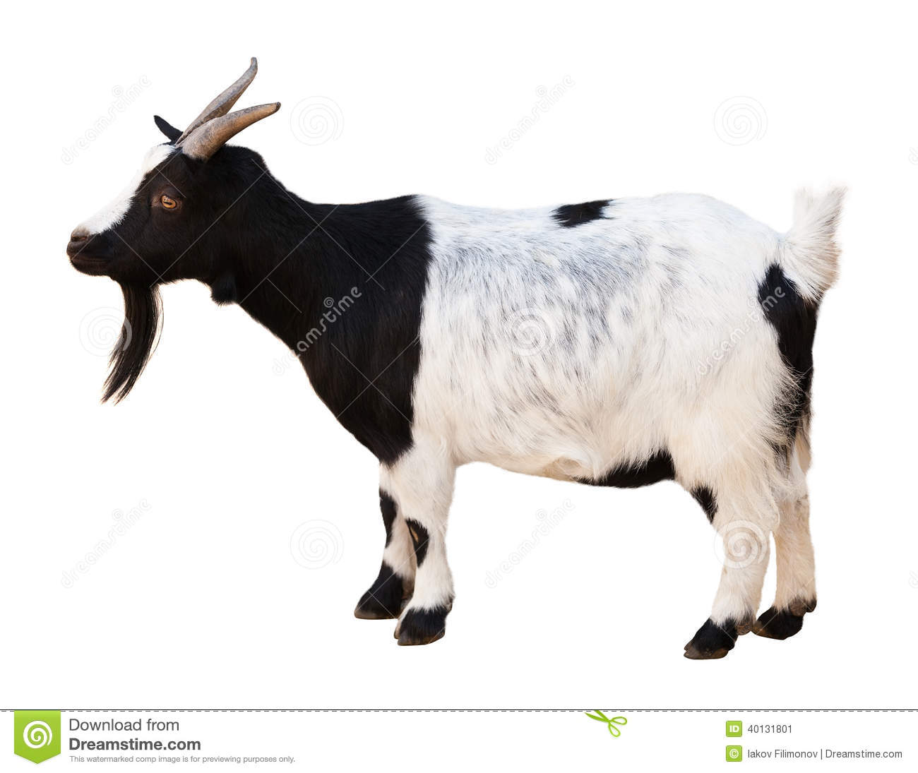 Male Goat Isolated Over White Stock Photo Image 40131801