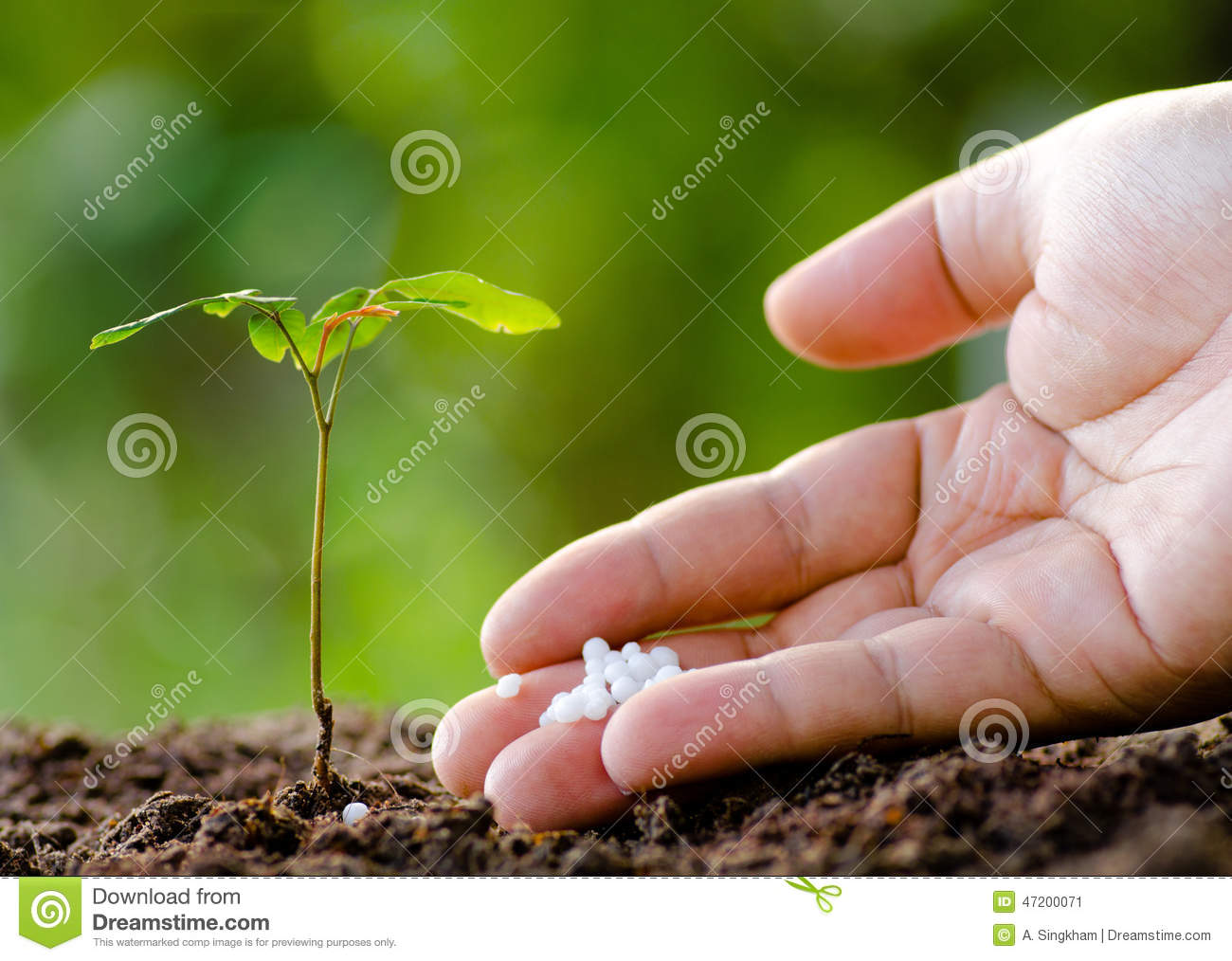 Male hand giving plant fertilizer to young tree