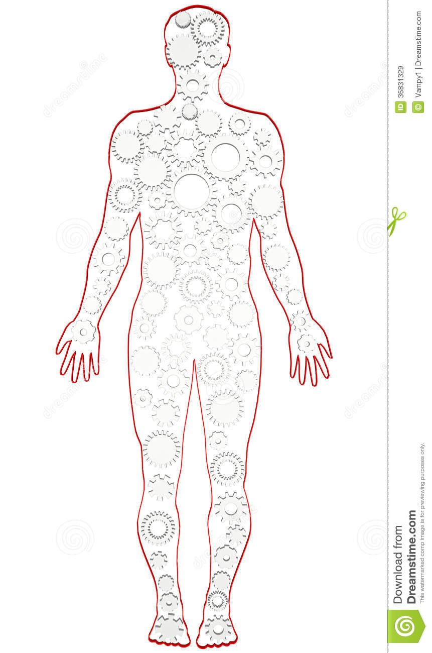 Male Human Body Anatomy With Gears Stock Illustration Illustration