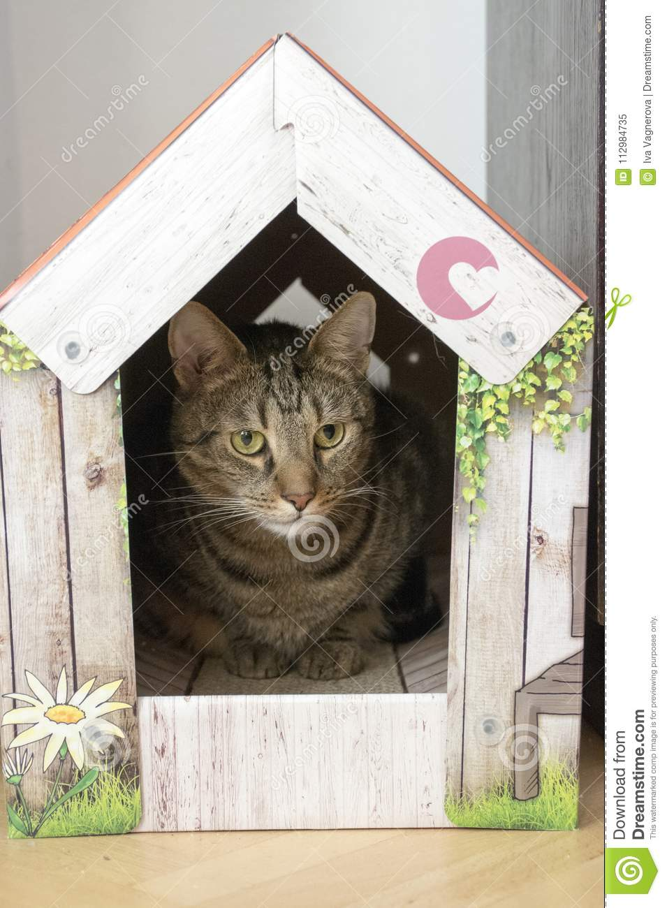 Funny marble cat in carboard handcraft house