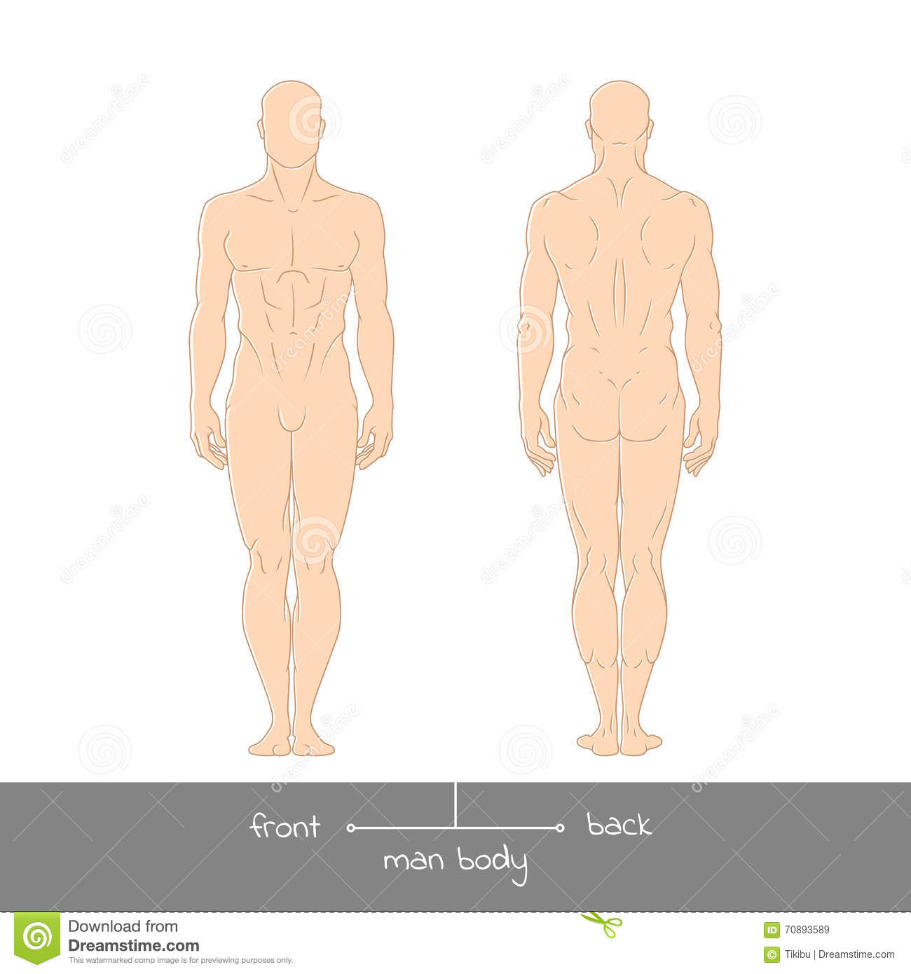 Male Muscular Body Shapes Colored Outline Vector