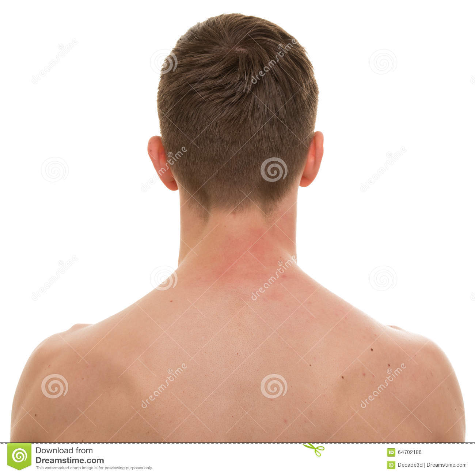 Back neck anatomy