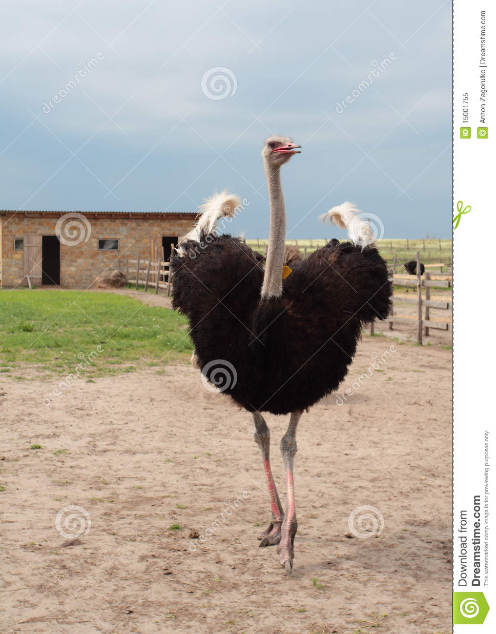 ostrich farming business plan free