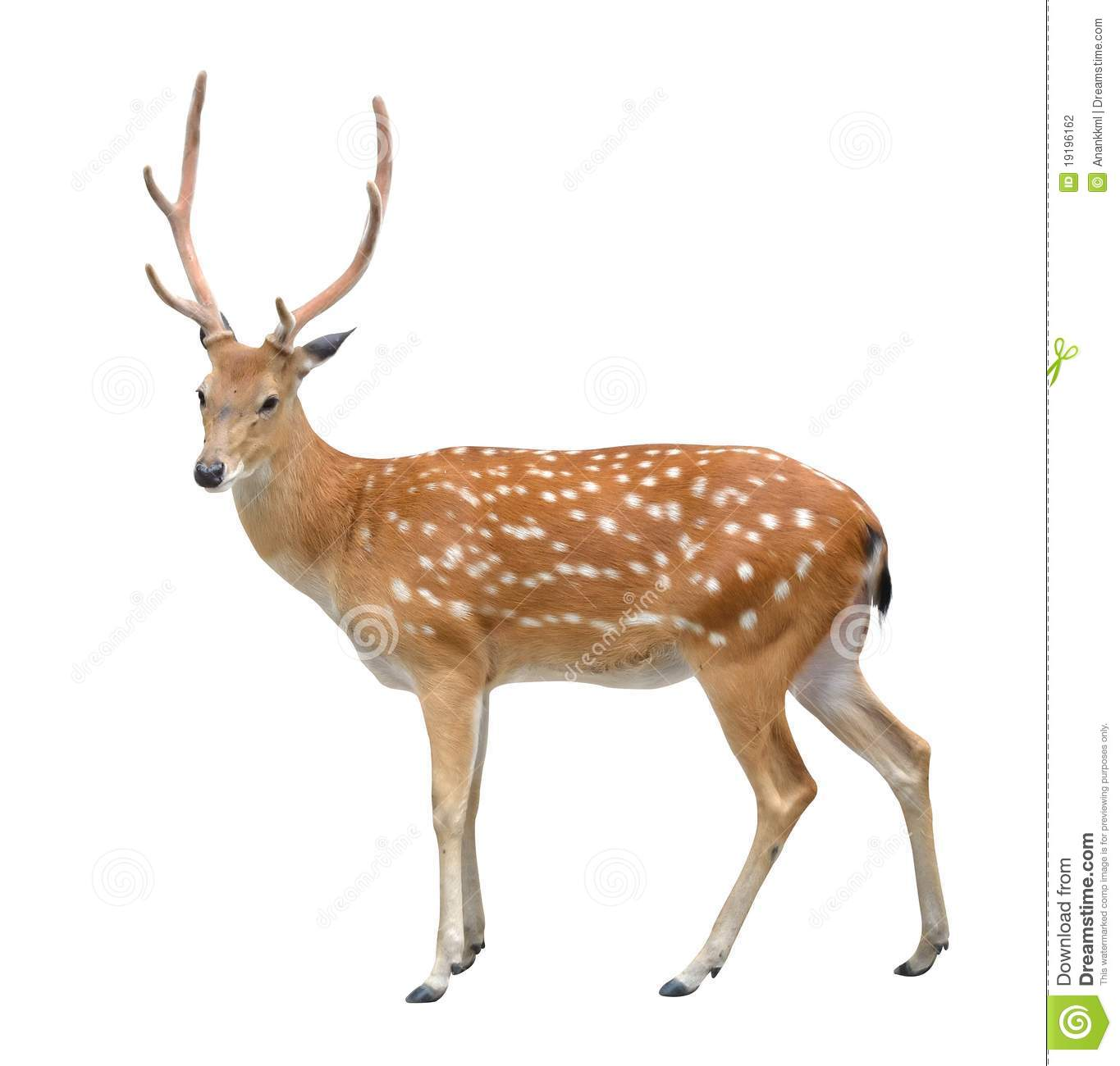 male sika deer stock photography image 19196162 white elephant clipart white elephant gift clipart