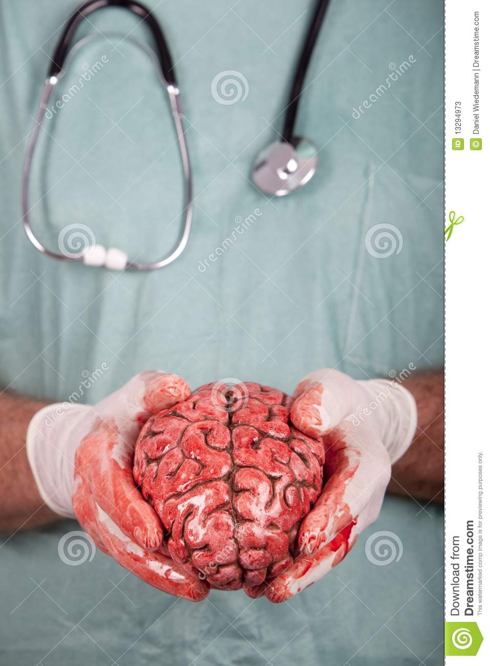 male surgeon holding brain stock image image of gloves
