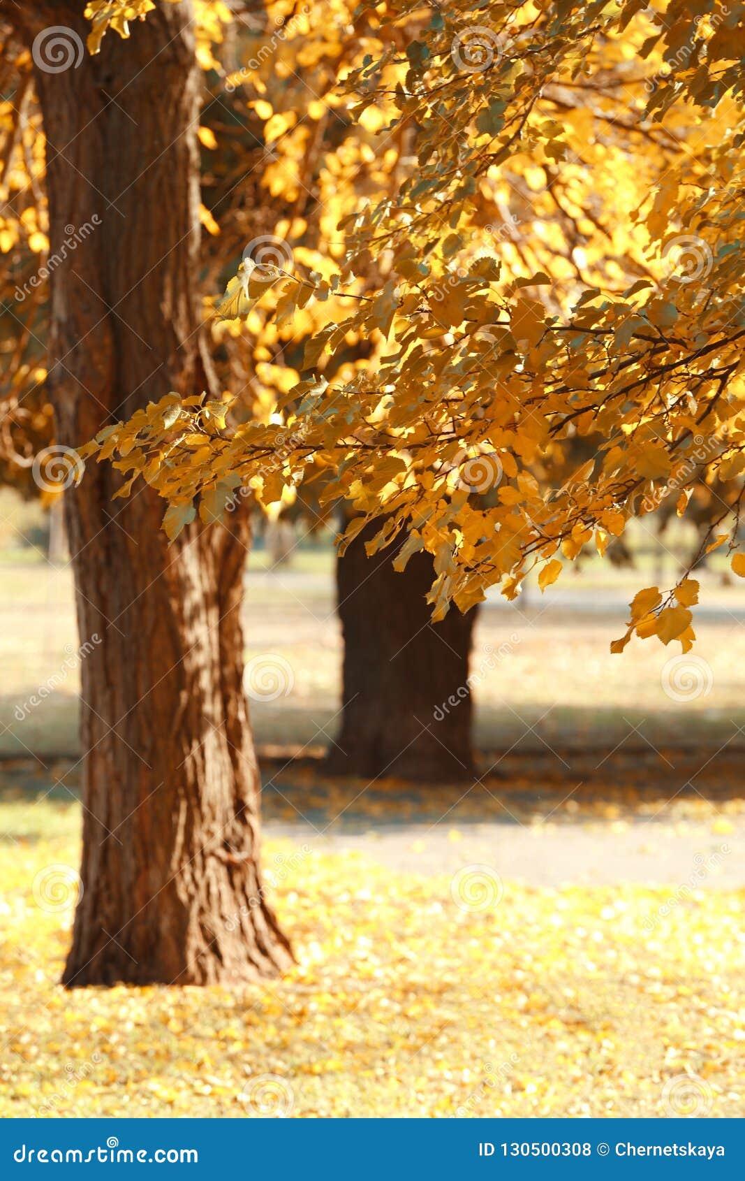 Malerische Landschaft des Herbstparks