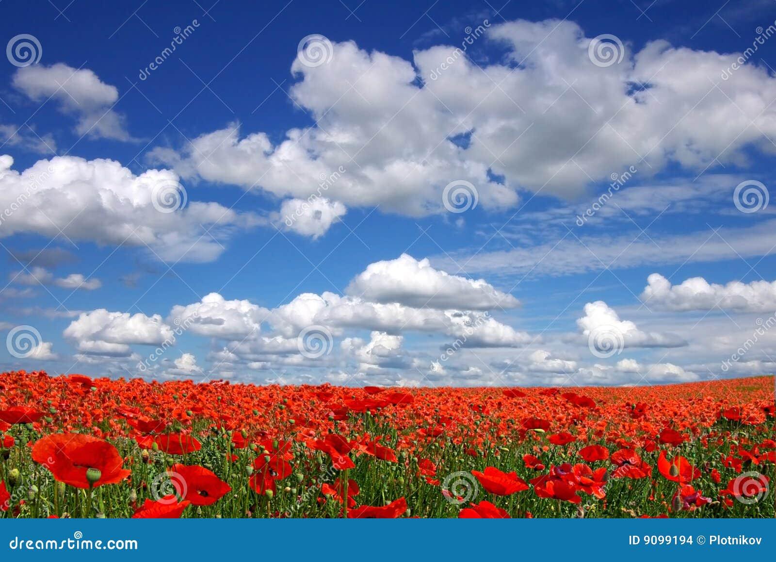 Malerische Landschaft mit Mohnblumeplantage