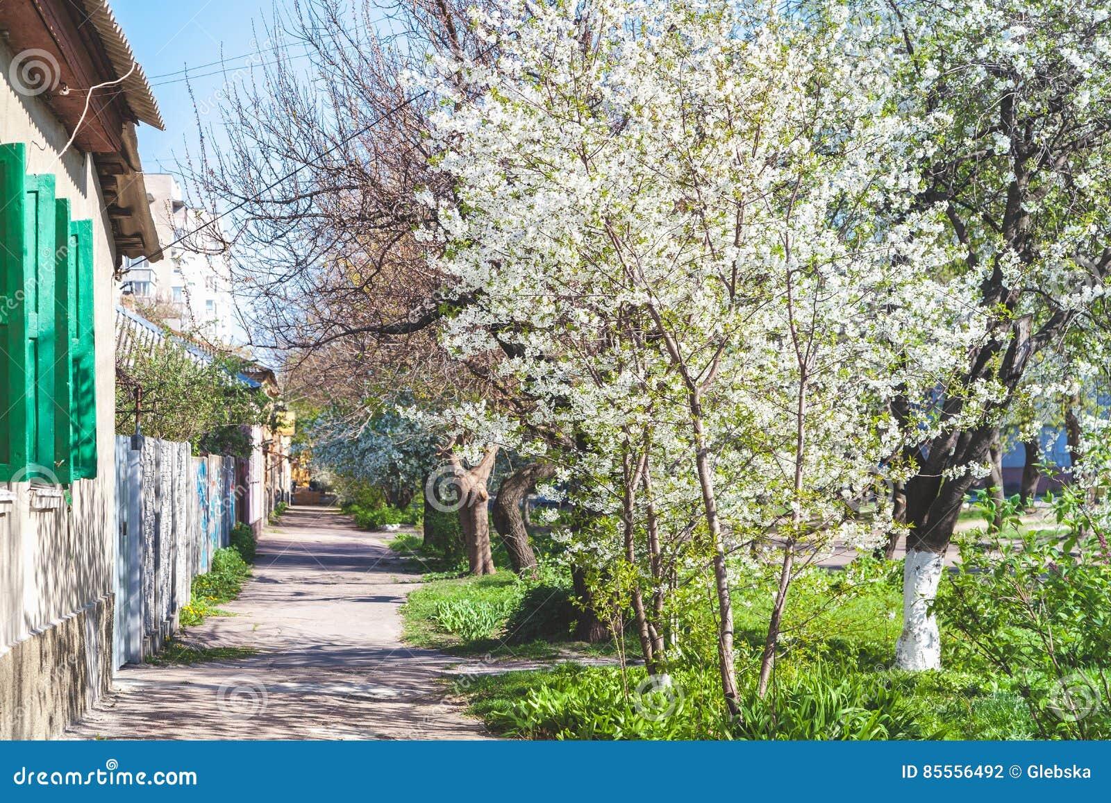 Malerische Straße entlang einstöckigen Häusern und Kirschblüte