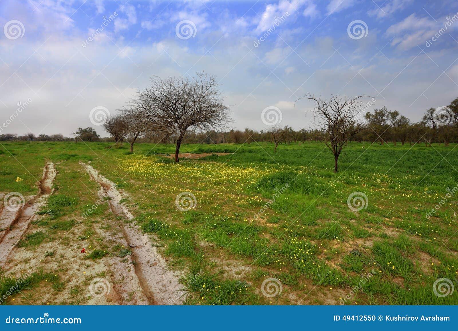 Download Malerisches Frühlingsfeld stockfoto. Bild von horizont - 49412550