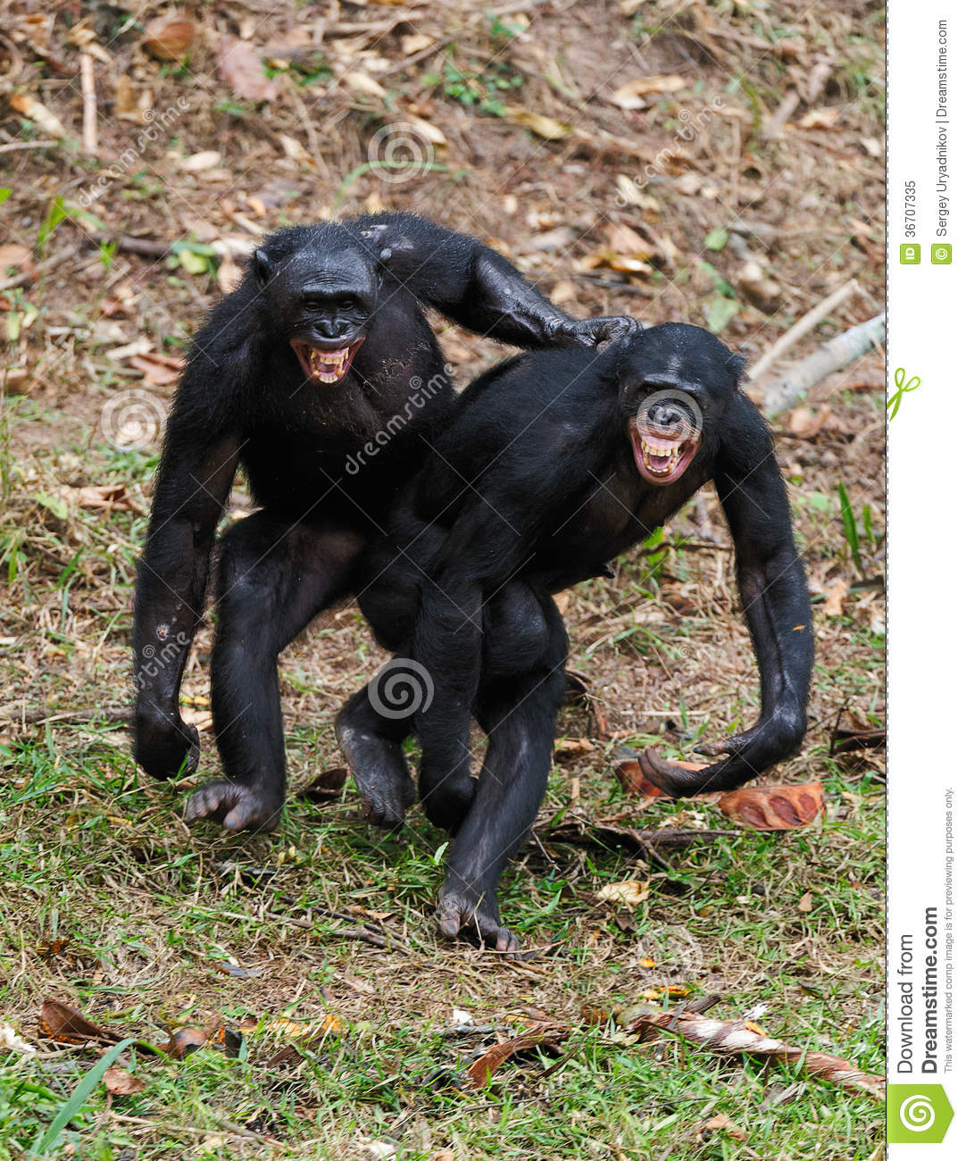 symbolism the hairy ape The hairy ape is a tragedy of modern times, having no conventional hero of the classical or aristotelian tradition the play presents an antihero , possessing no extraordinary quality or tragic flaw .