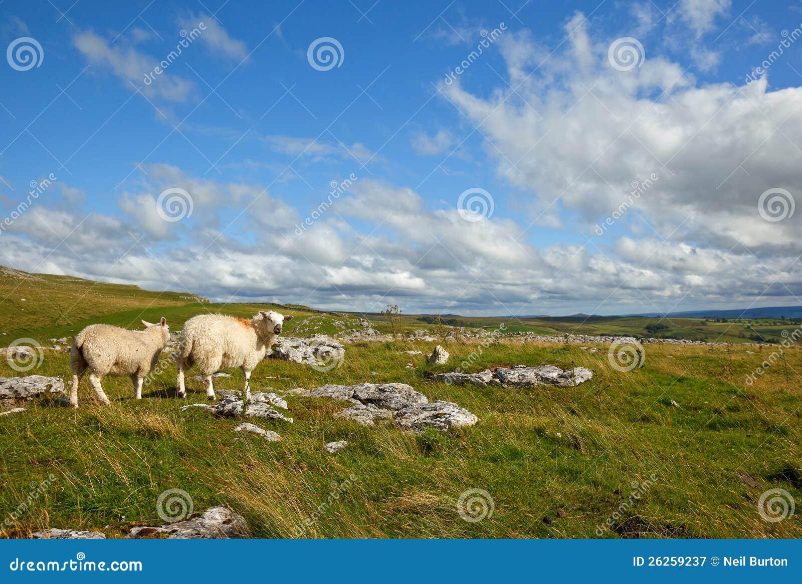 Malham landscape