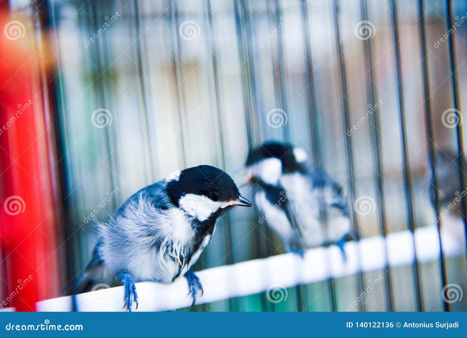 Mali śliczni ptaki w klatce cieszy się ranku wschód słońca