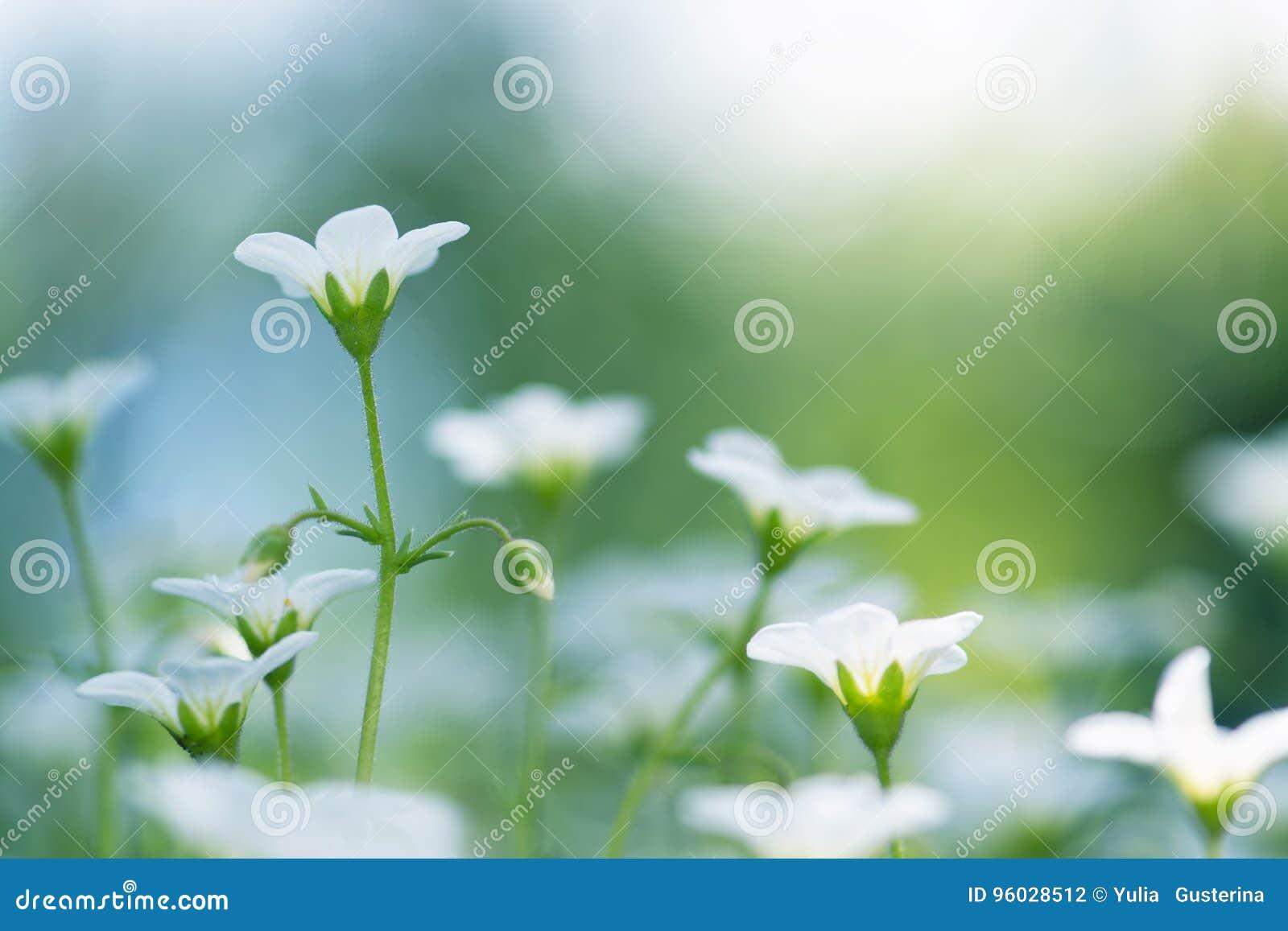 Mali biali kwiaty na pięknym tle Selekcyjna ostrość