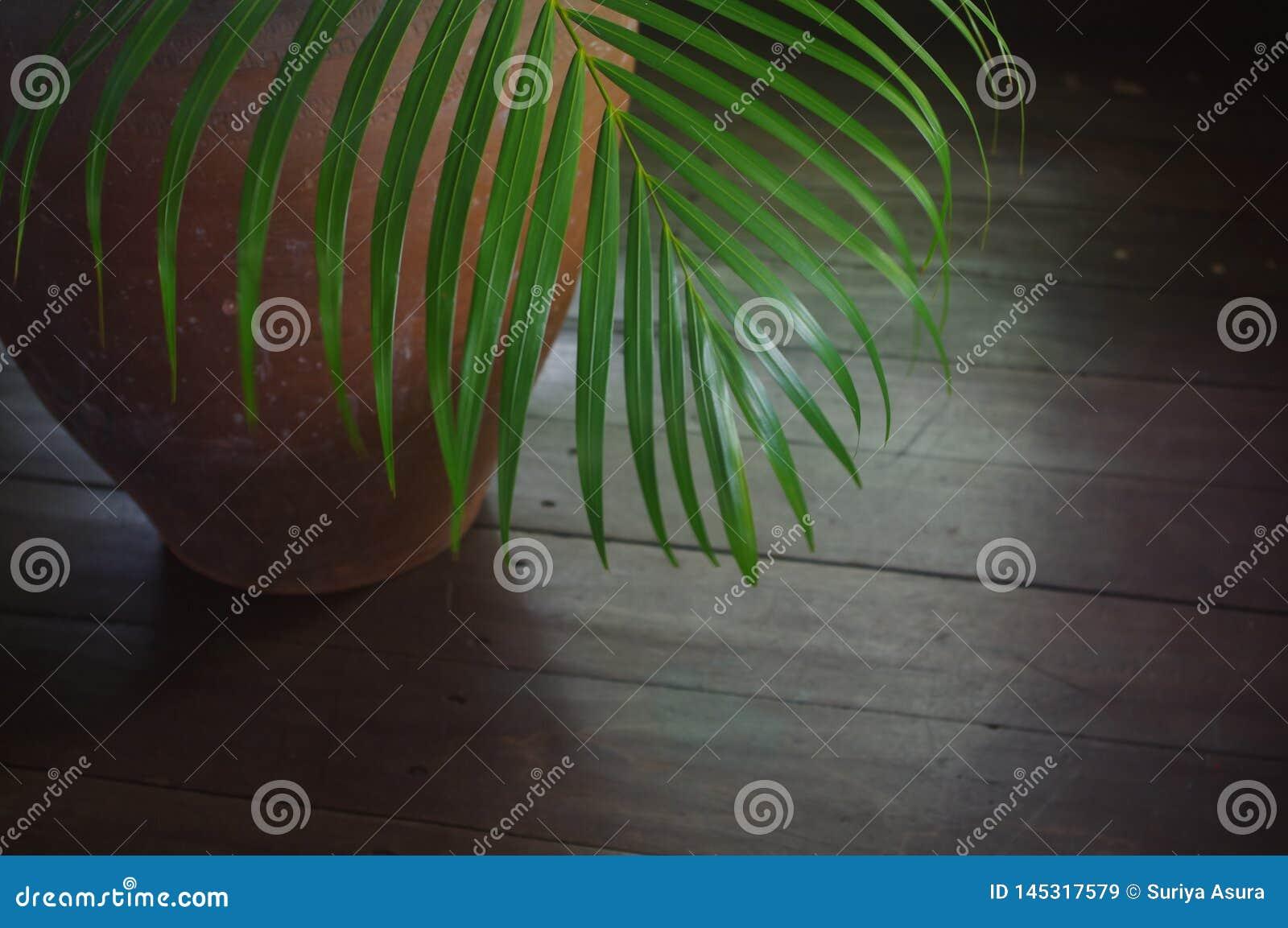 Mali drzewka palmowe, składa się glinianych garnki używać dla wewnętrznej dekoracji