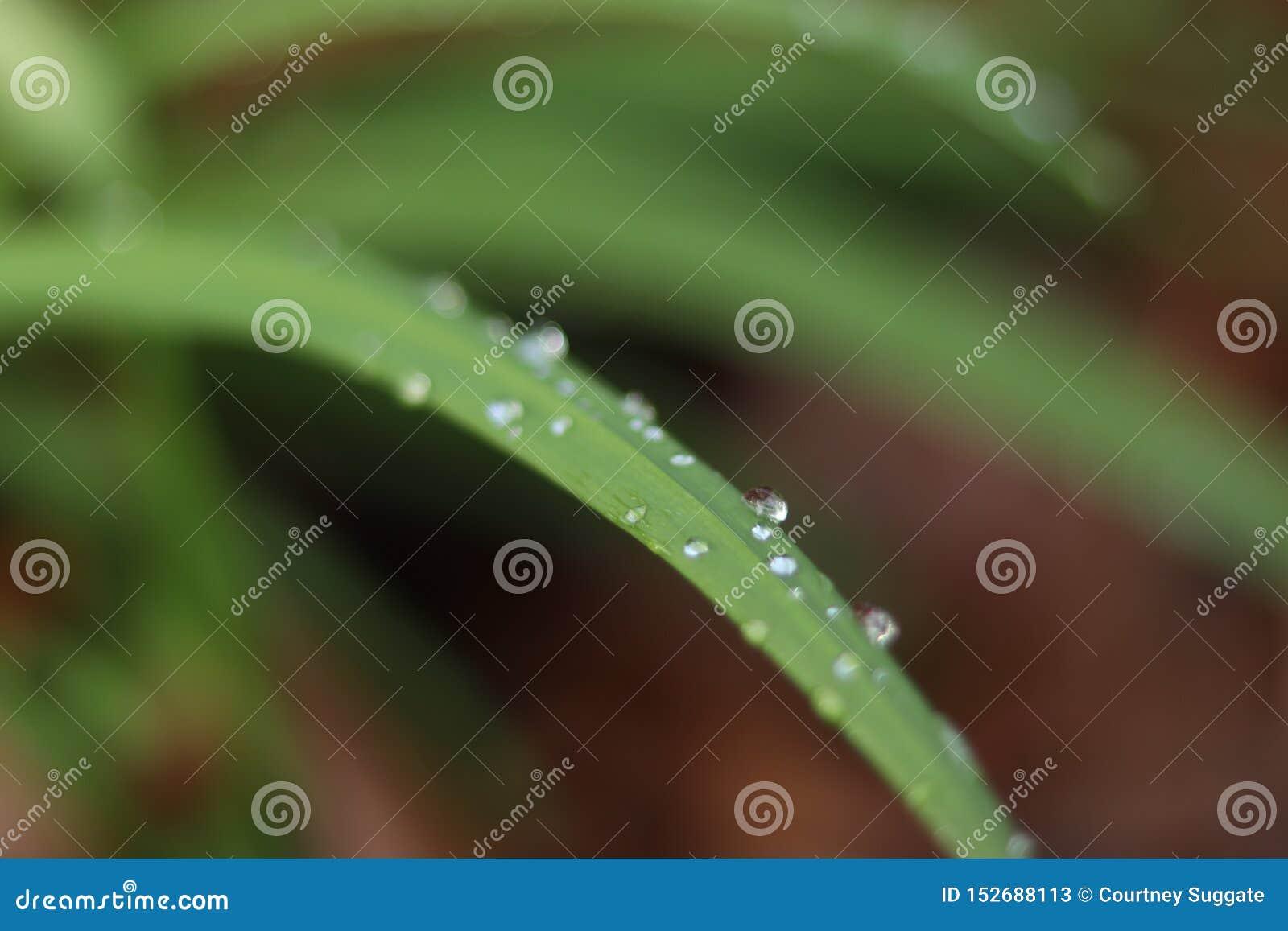 Mali raindrops na roślina liściu