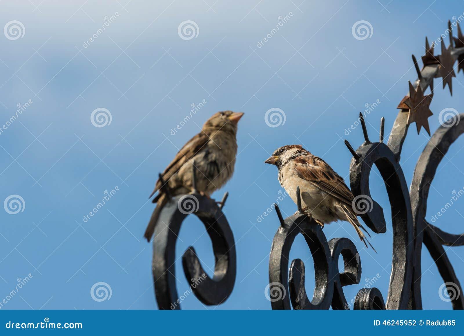Mali Wróbli ptaki