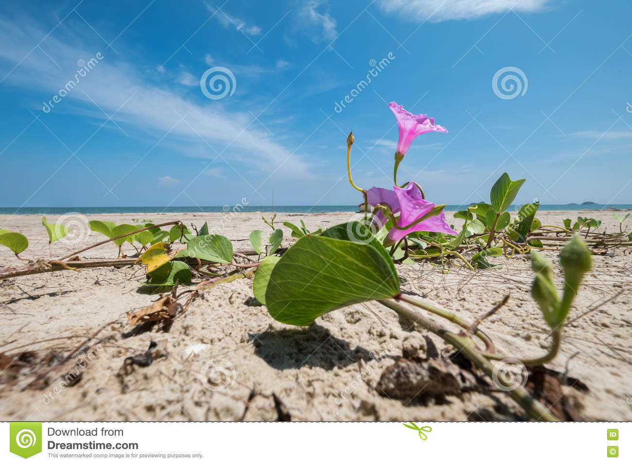Mall pupil flowers on a beach with sea