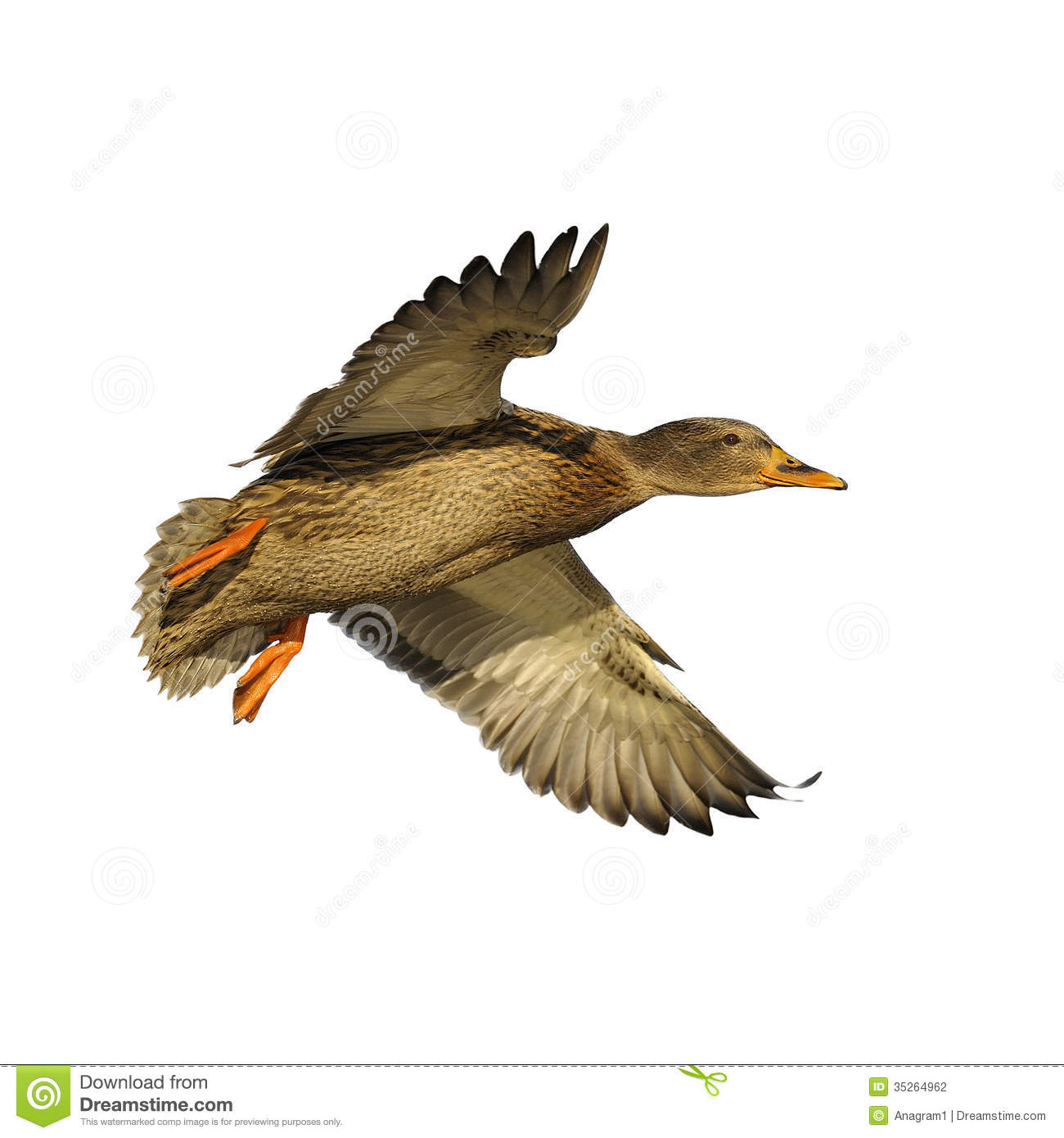 Displaying 19> Images For - Flying Ducks Clipart...