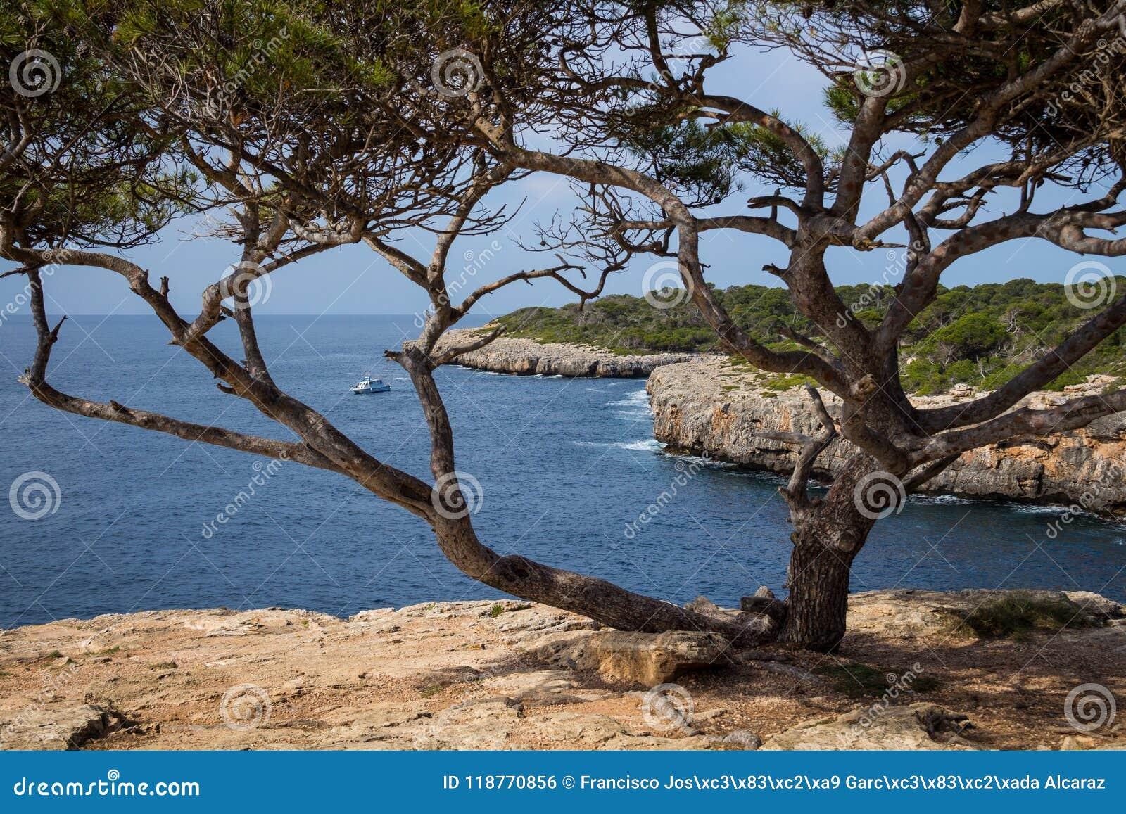 Mallorca, Spanje; 17 maart, 2018: de kreek en de boom van pi