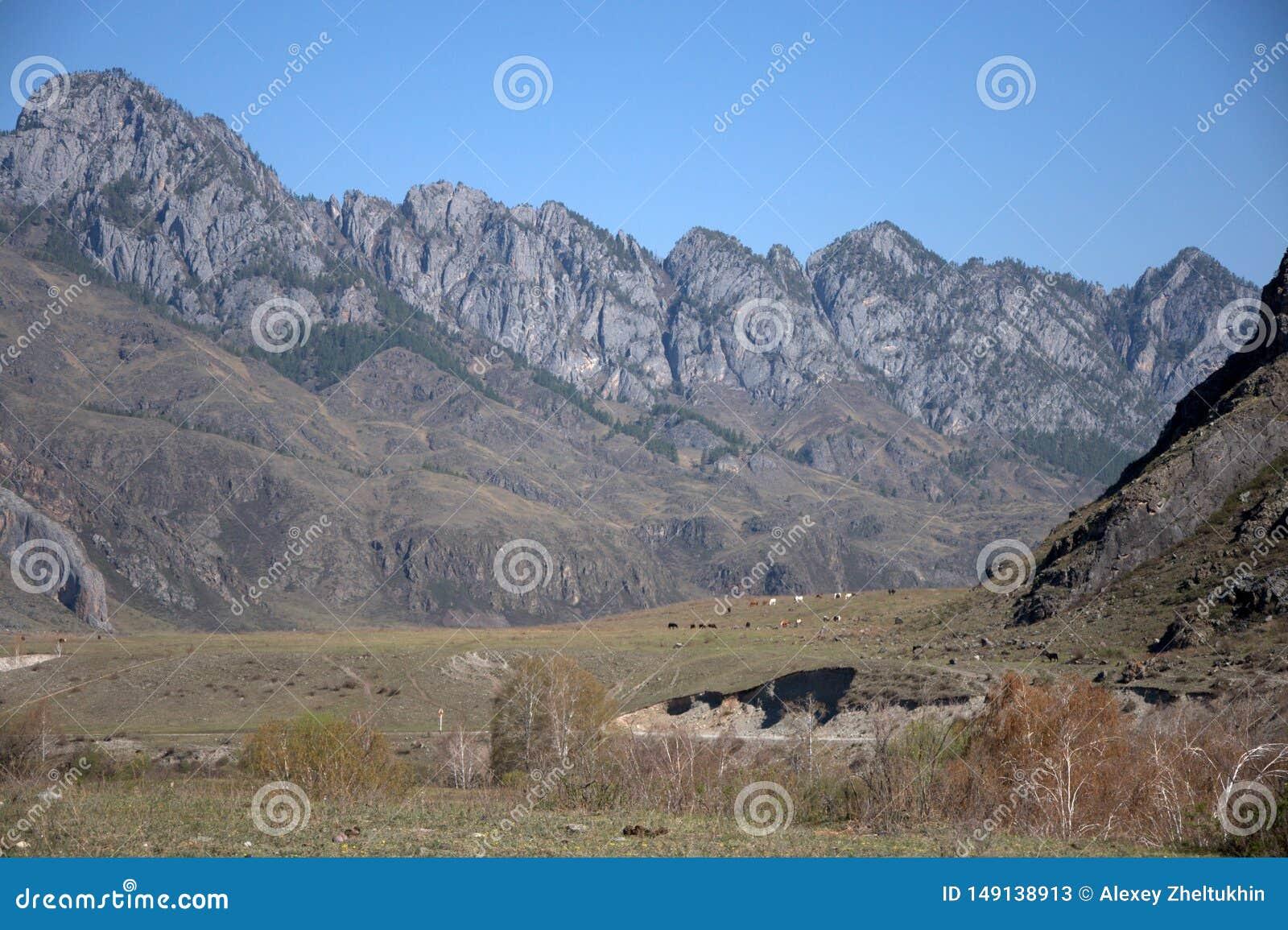 Malownicza dolina otaczaj?ca pasmami g?rskimi altai