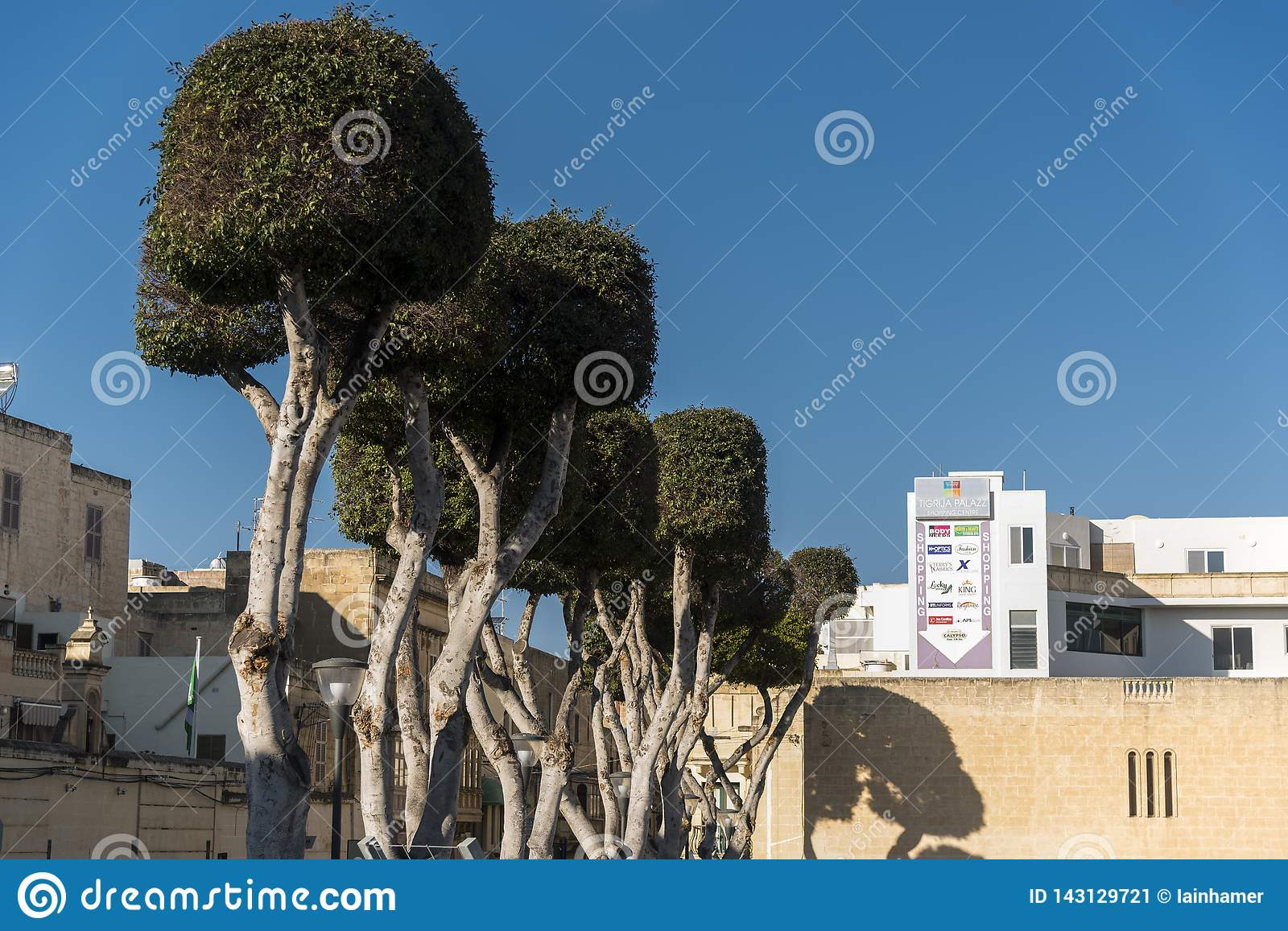 Pollarded trees on a street Victoria Gozo