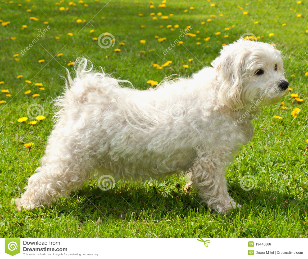 Cute M Names For Dogs