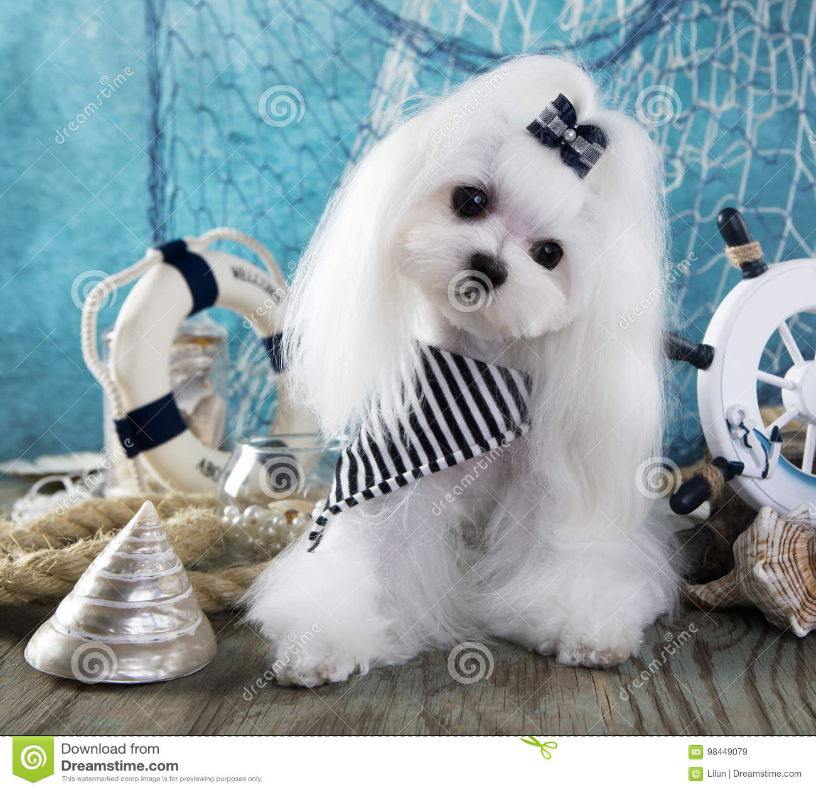 Maltese dog and sea dekor