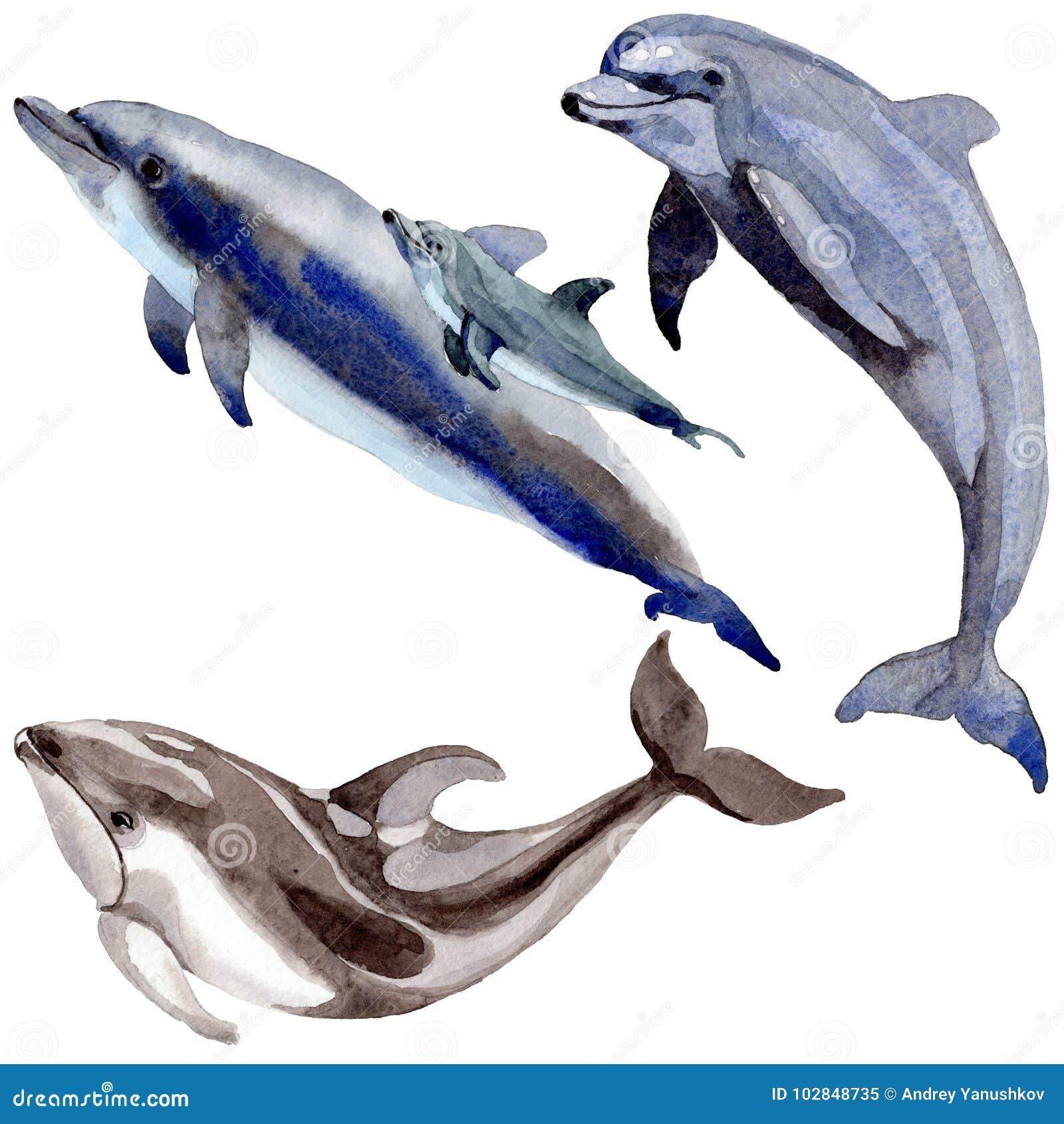 Mamíferos salvajes del delfín en un estilo de la acuarela aislados