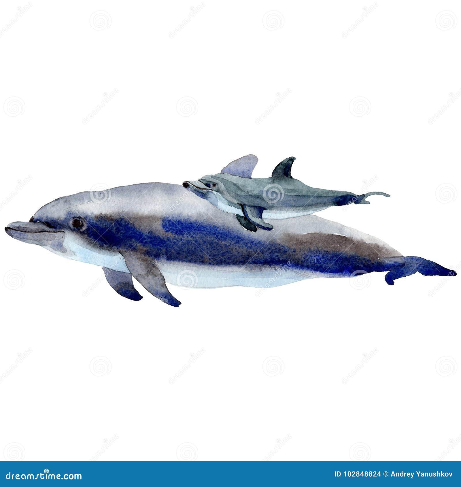 Mamíferos selvagens do golfinho em um estilo da aquarela isolados