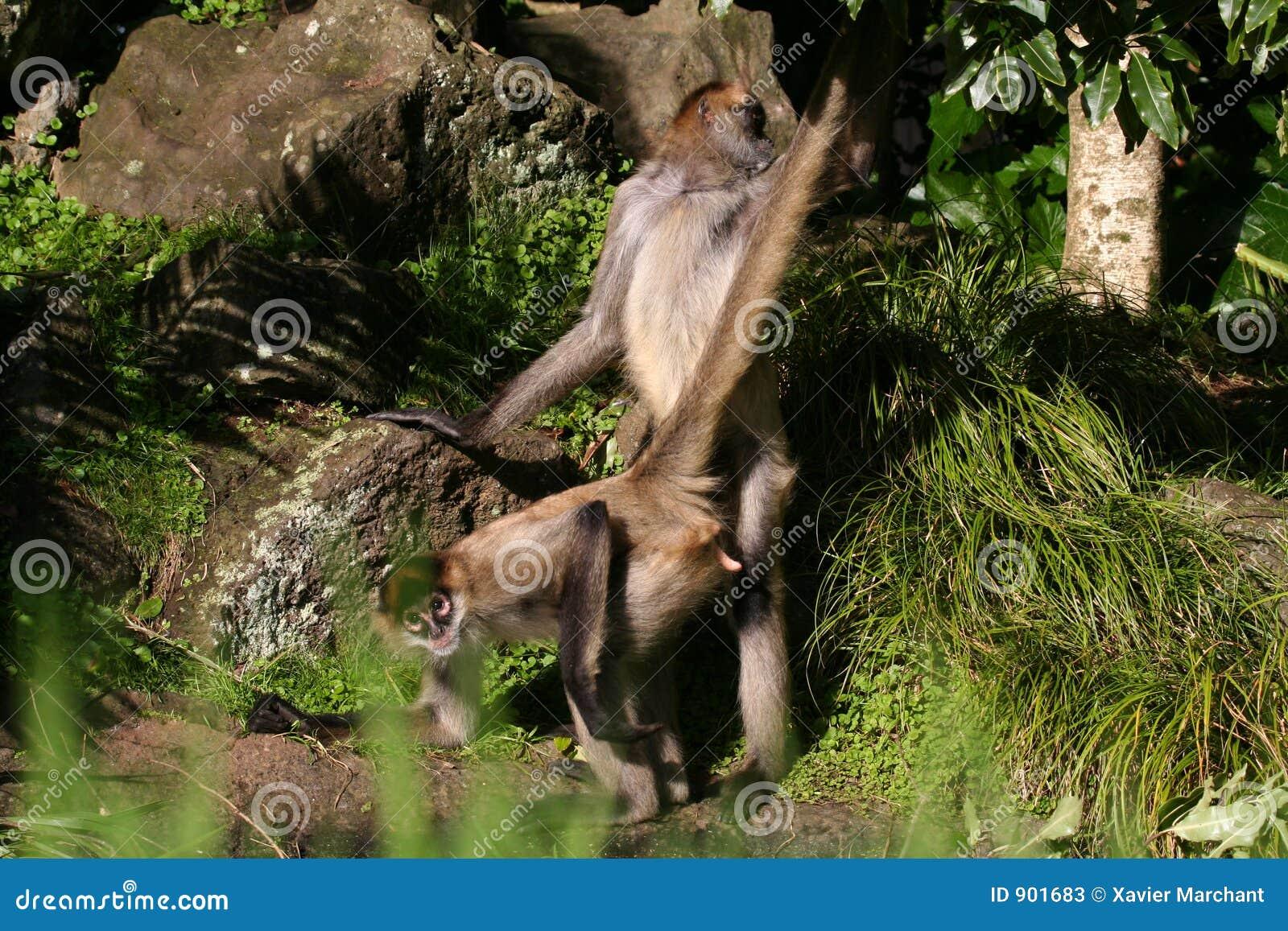 seks z małpim filmem Jessica Drake porno