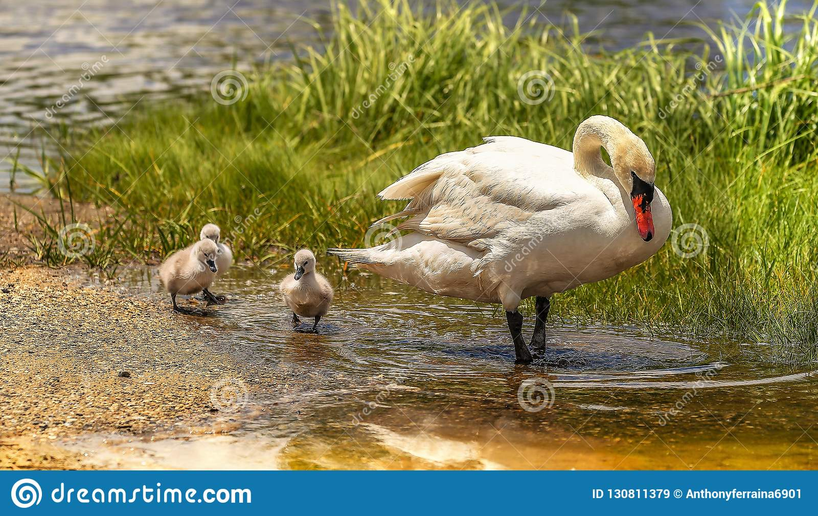 Mama i trzy łabędziątka