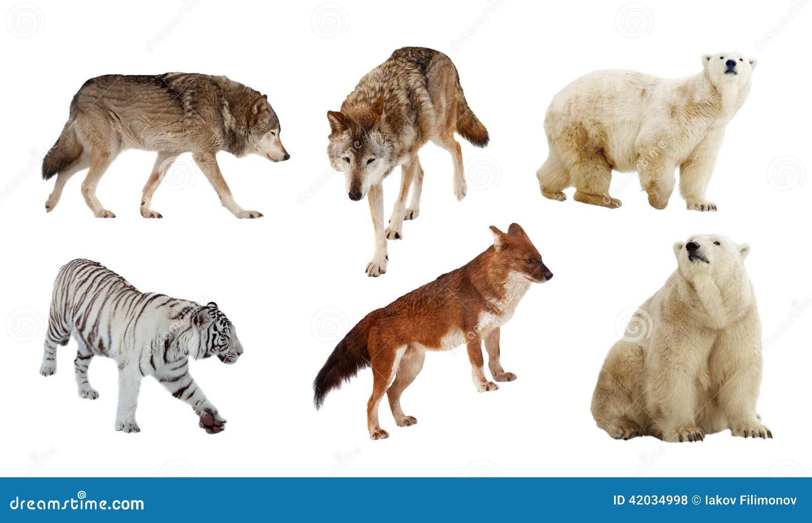 Small Dog Name List