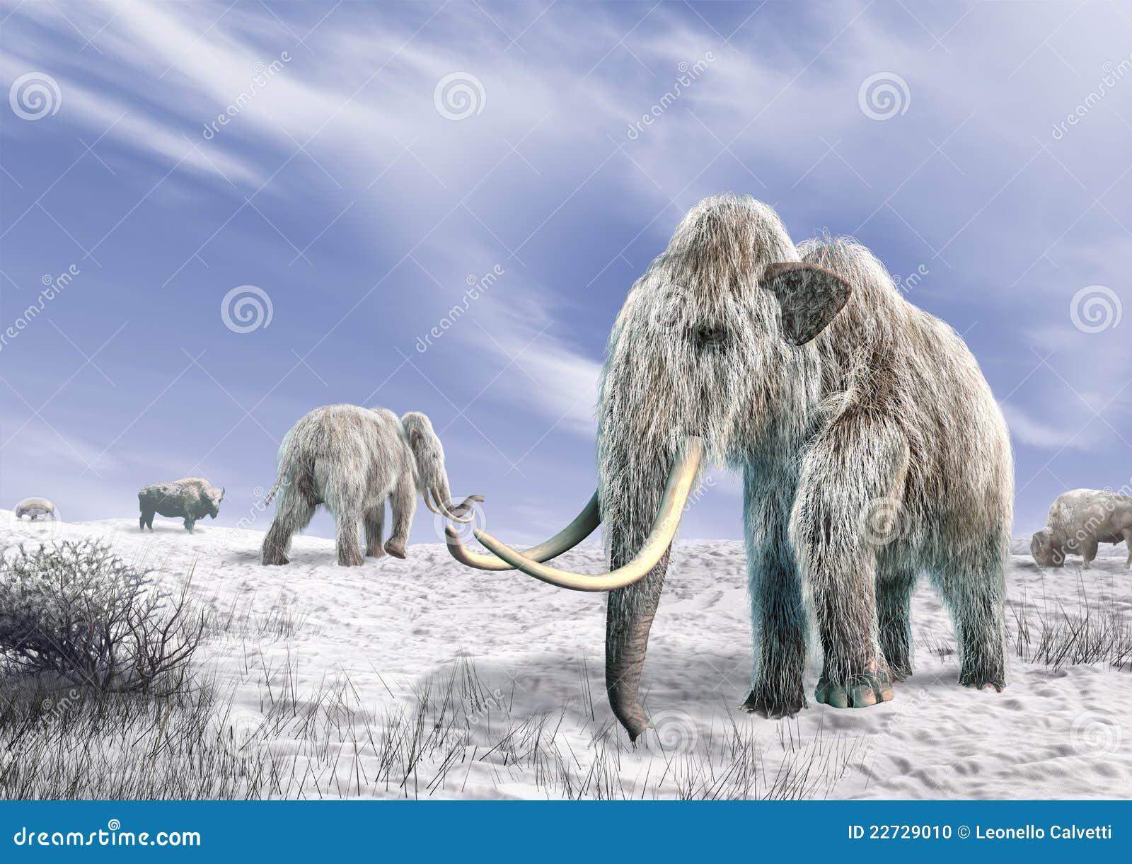 Mammoth dois em um campo coberto da neve.