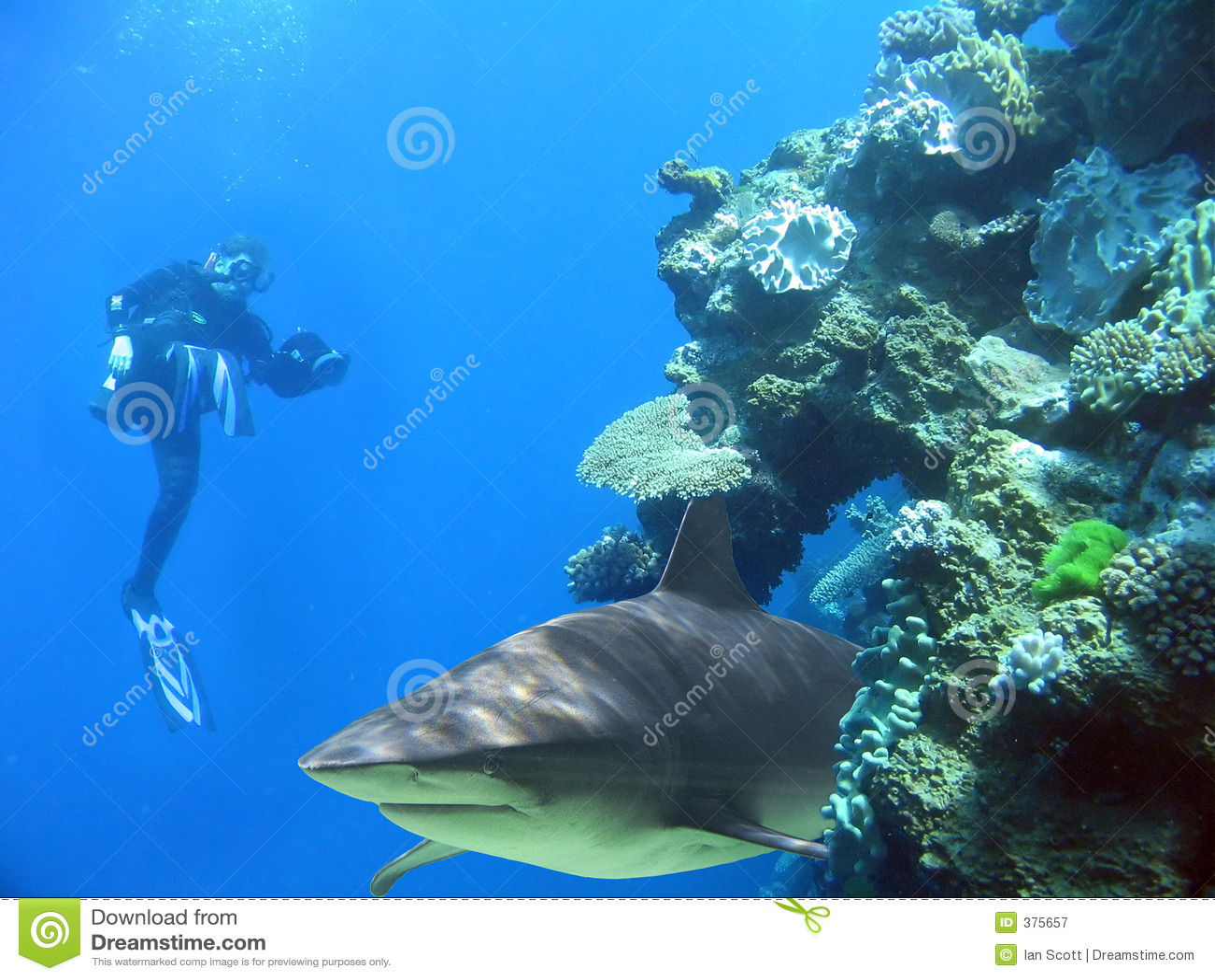 Man&Shark