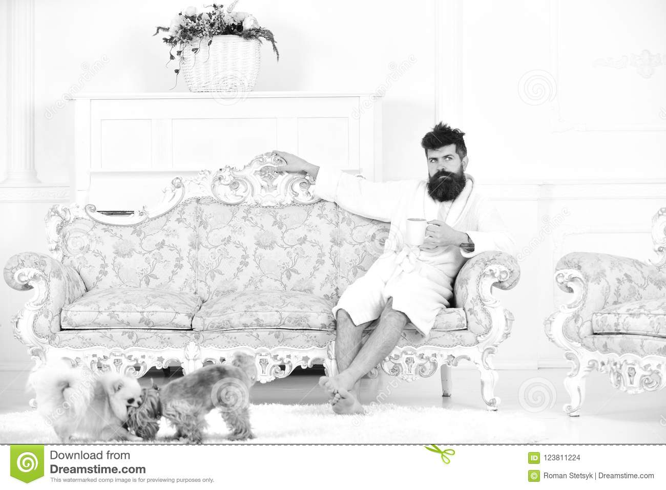 Man with beard and mustache enjoys morning while sitting on luxury sofa. Elite leisure concept. Man on dreamy face in