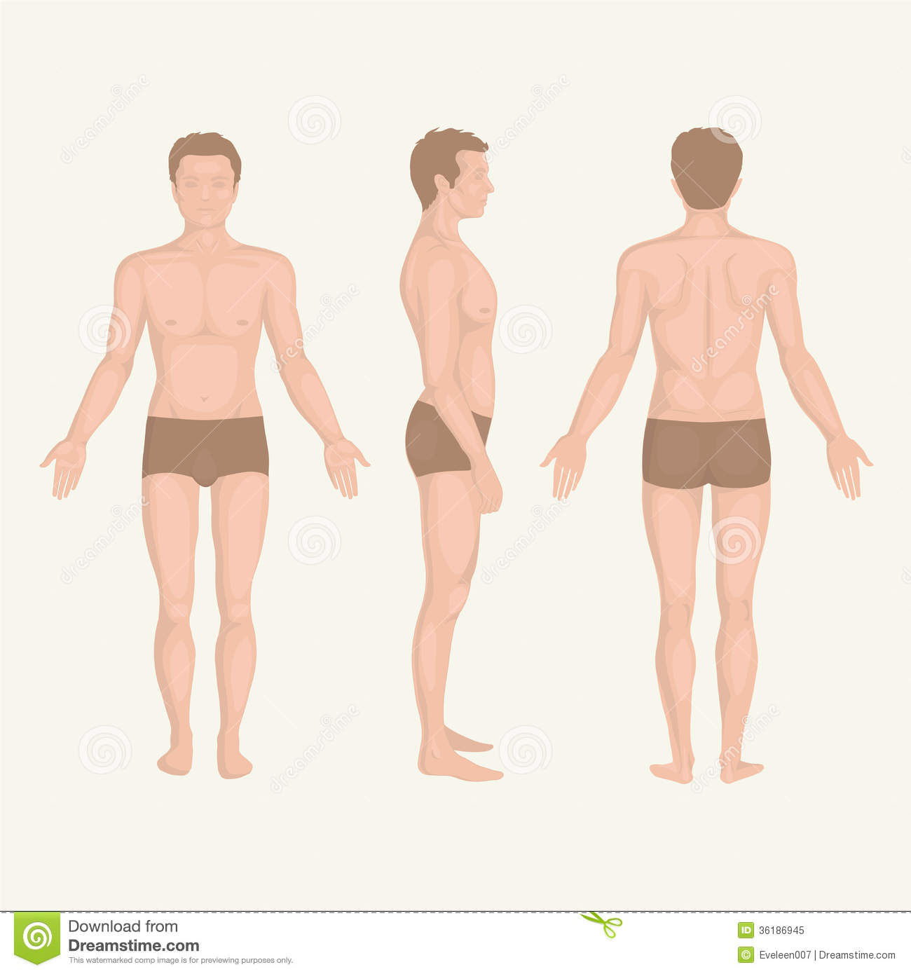 Man Body Anatomy Front Back And Side Stock Vector Illustration