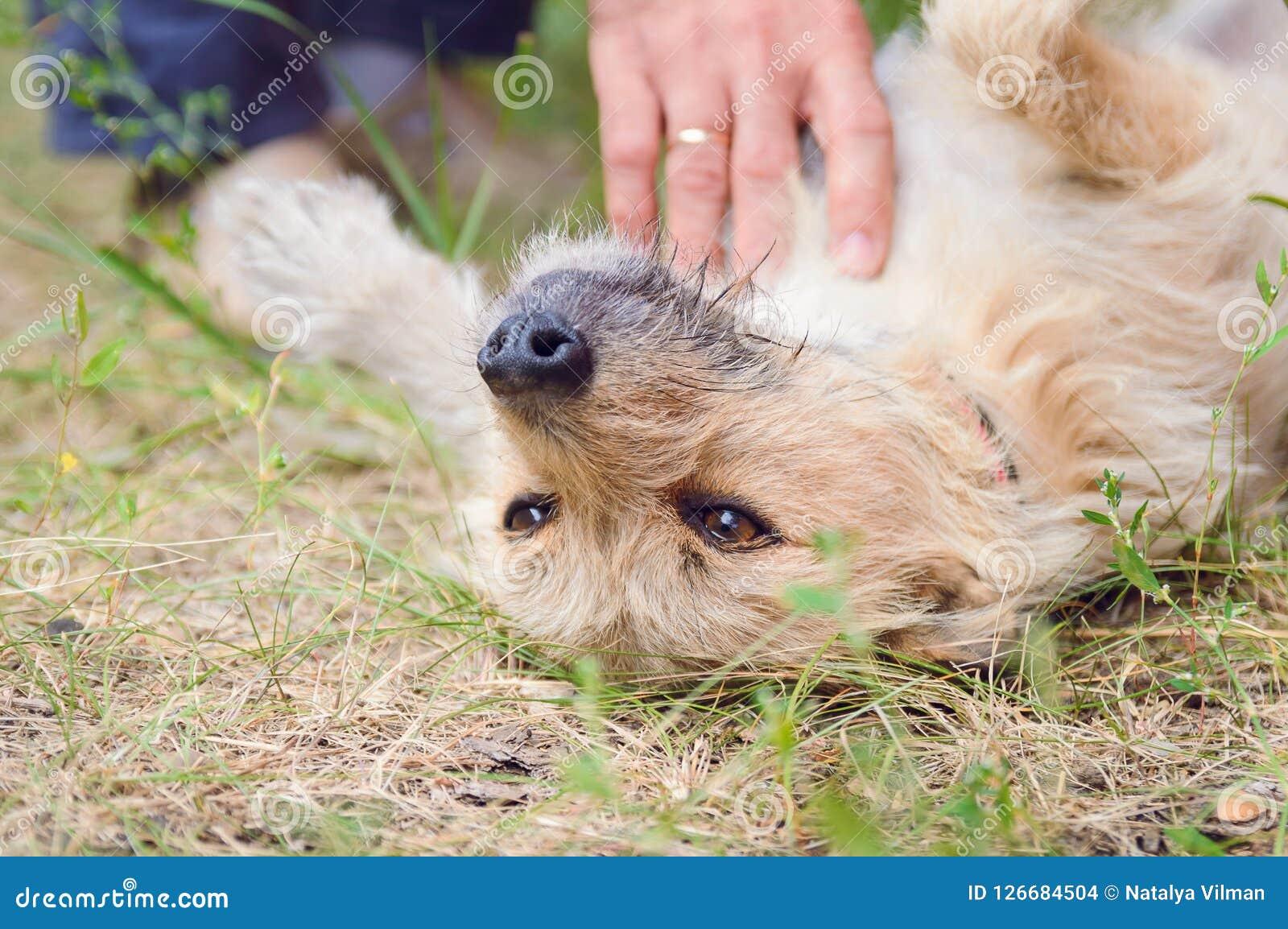 A man caresses his dog.