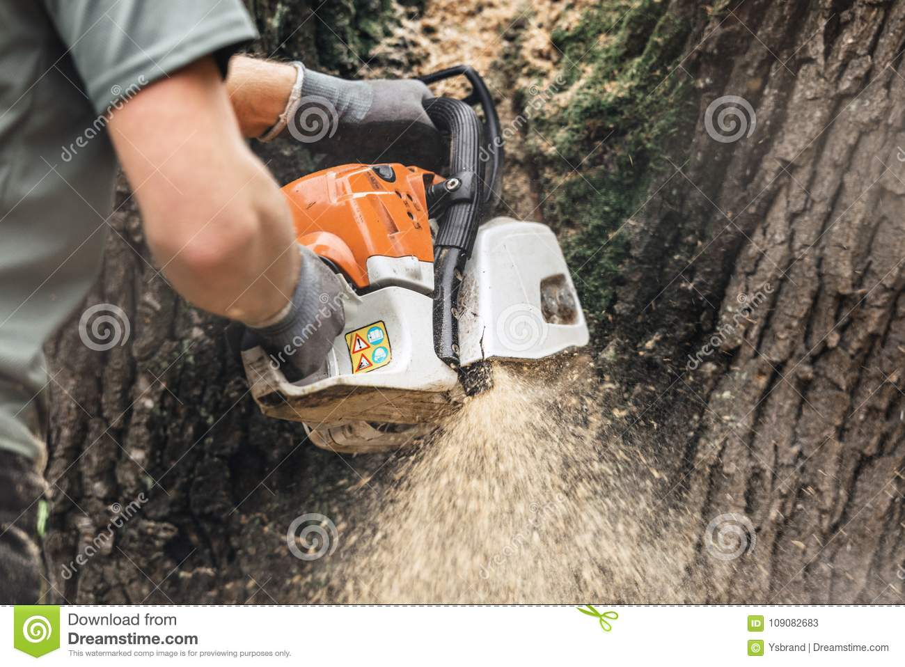 Man with chainsaw cutting large tree trunk.