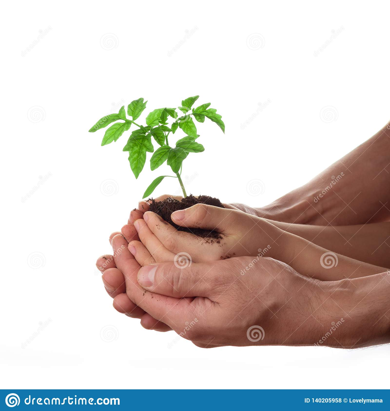 Man and child holding soil with tomato seedling isolated on white. Family, gardening and environmental protection concept