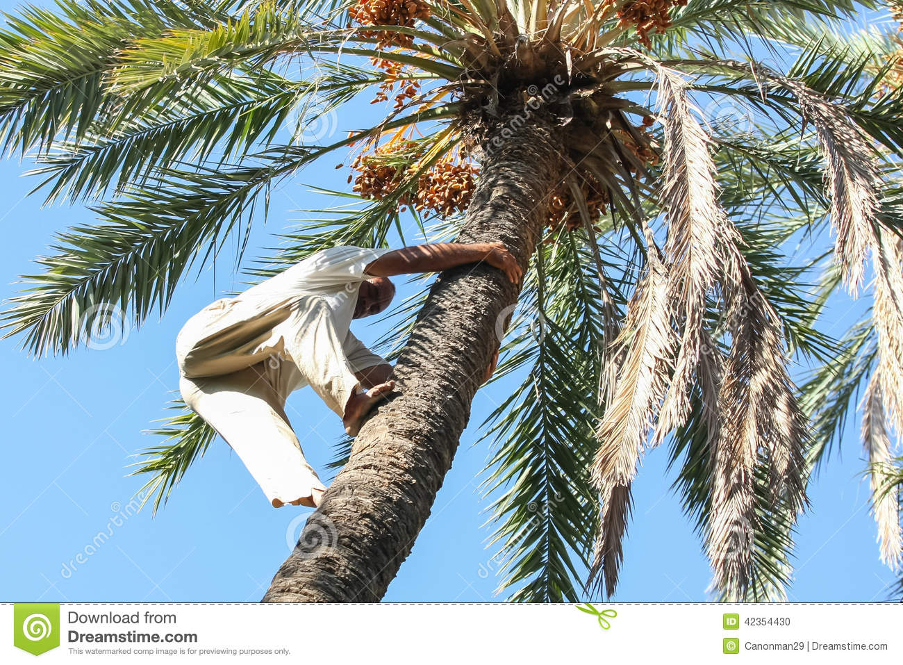 dating ancient trees The palm tree: palm sunday 21 feb palm trees in ancient desert sands grew and satisfied almost every need the ancient jews needed  the ancient date palm tree,.