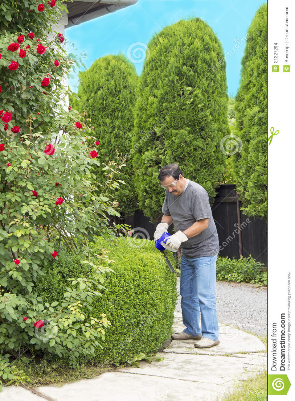 man cutting bushes in the garden stock photo image 31327294. Black Bedroom Furniture Sets. Home Design Ideas