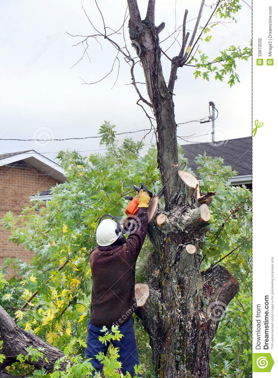How To Trim Large Tree Branches