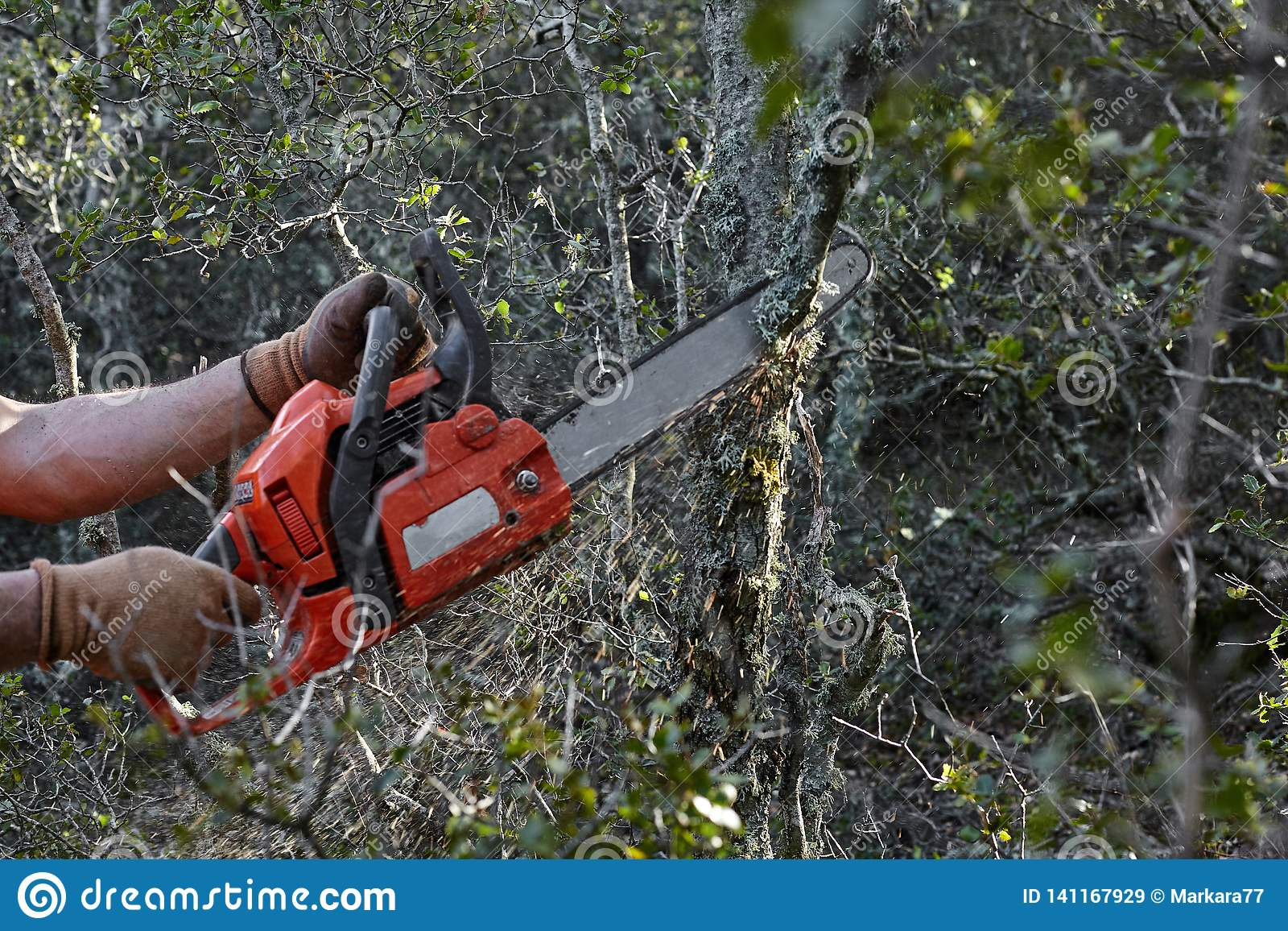 Man cutting trees using an electrical chainsaw in the forest