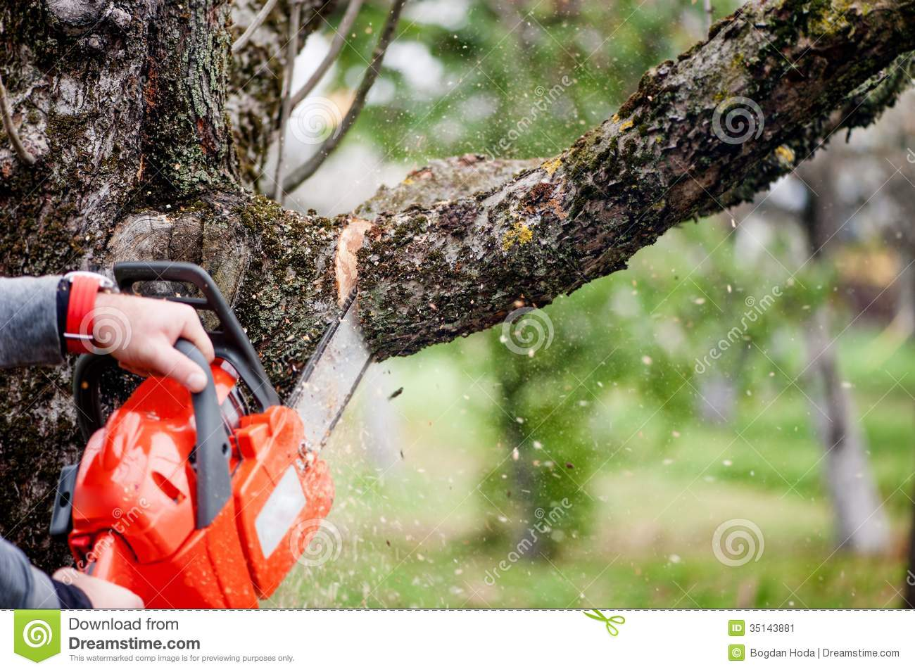 Tractor Man On Cutting Trees : Man cutting trees using an electrical chainsaw stock image
